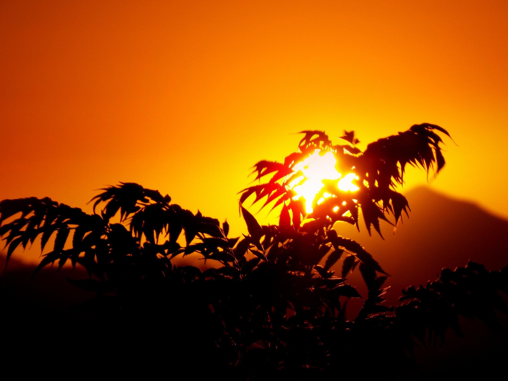 Photo in Landscape #another #sunset #behind bushes #my garden #bitez #bodrum #close up