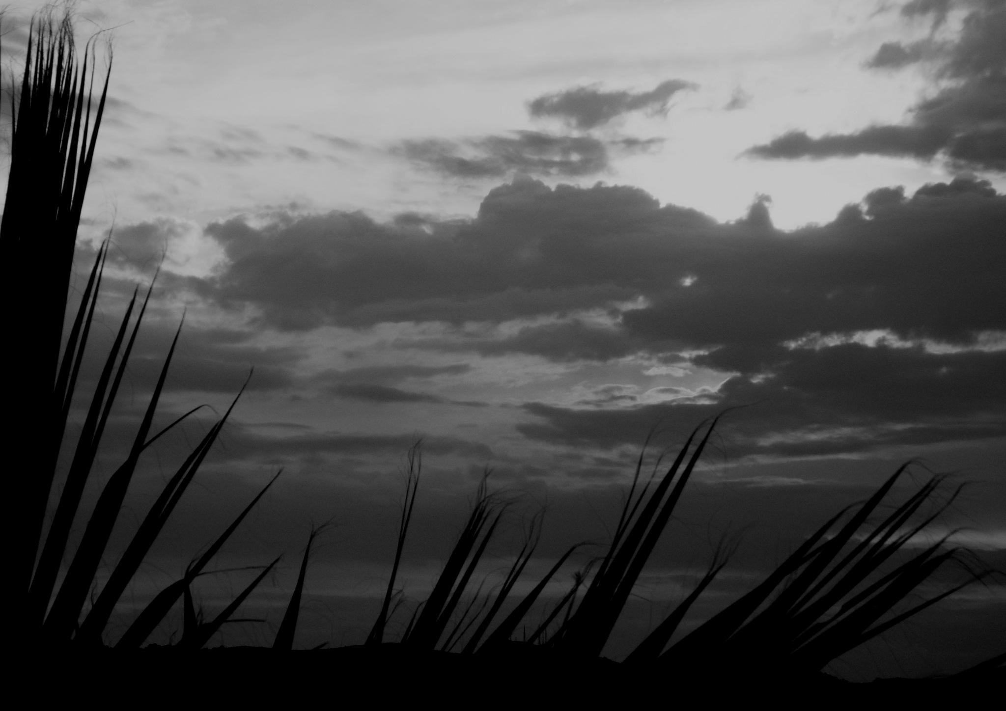 B&W SUNSET, BITEZ by Akin Saner