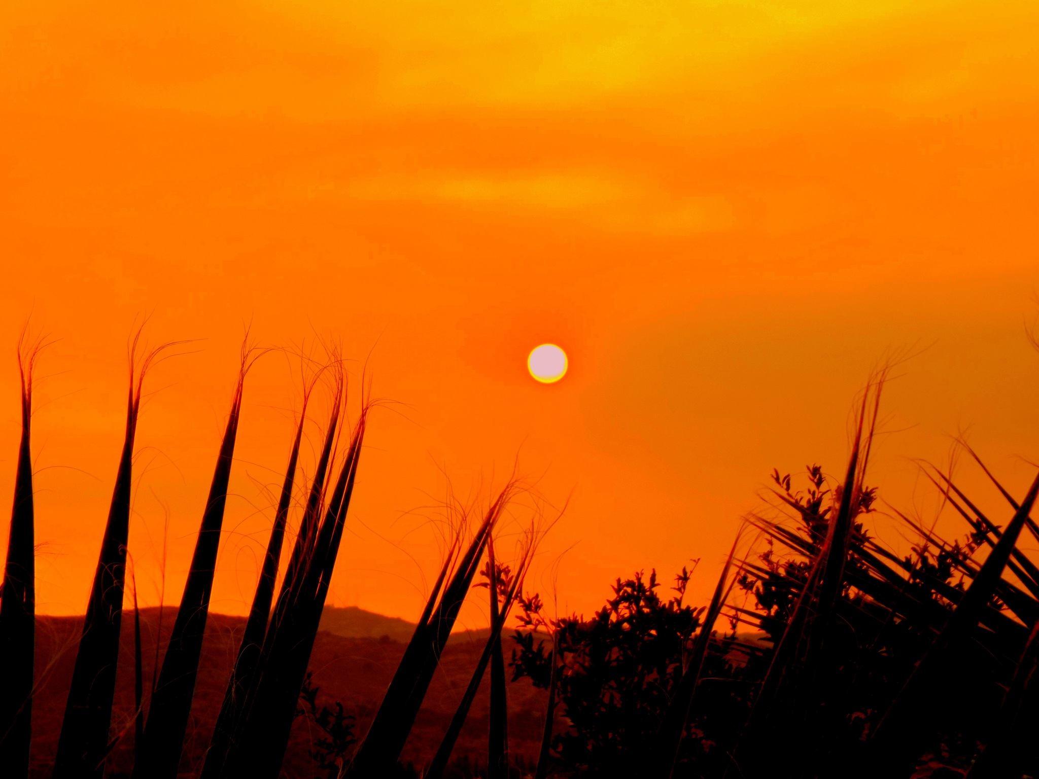 CACTUS LEAVES  ARE ALSO ATTRACTED BY THE SETTING SUN LAST NIGHT by Akin Saner