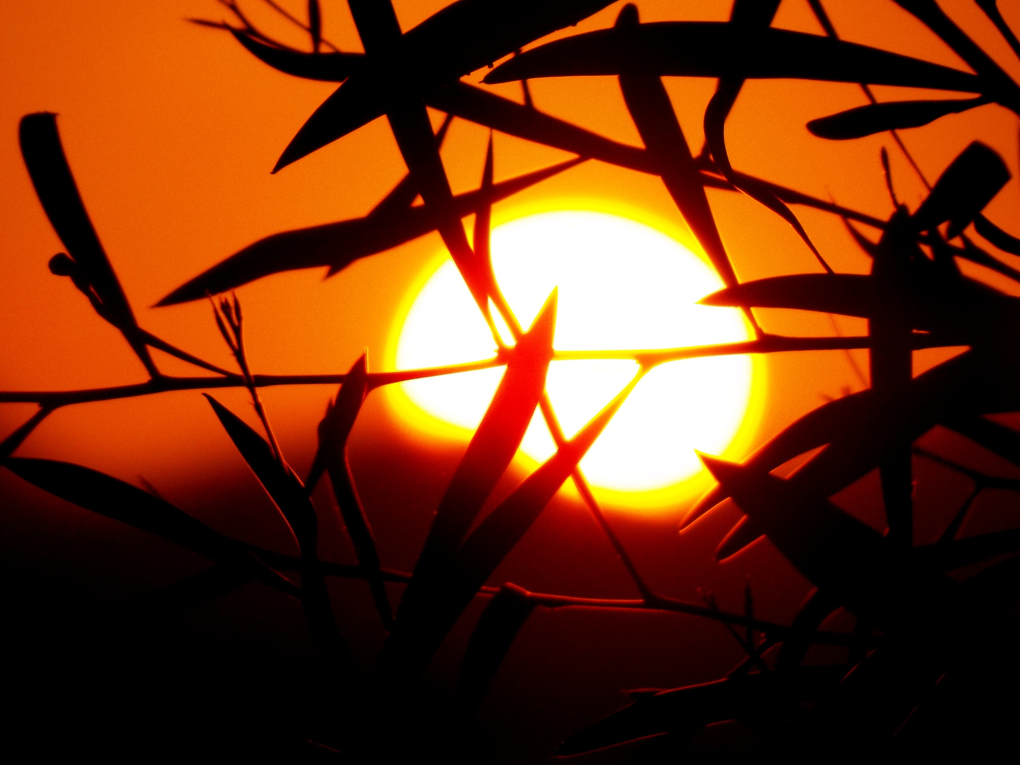 THE SUN, BEHIND THE BUSHES by Akin Saner