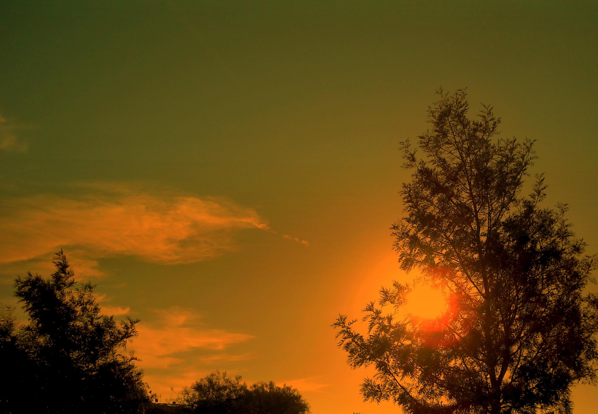 SUNSET FROM MY GARDEN by Akin Saner