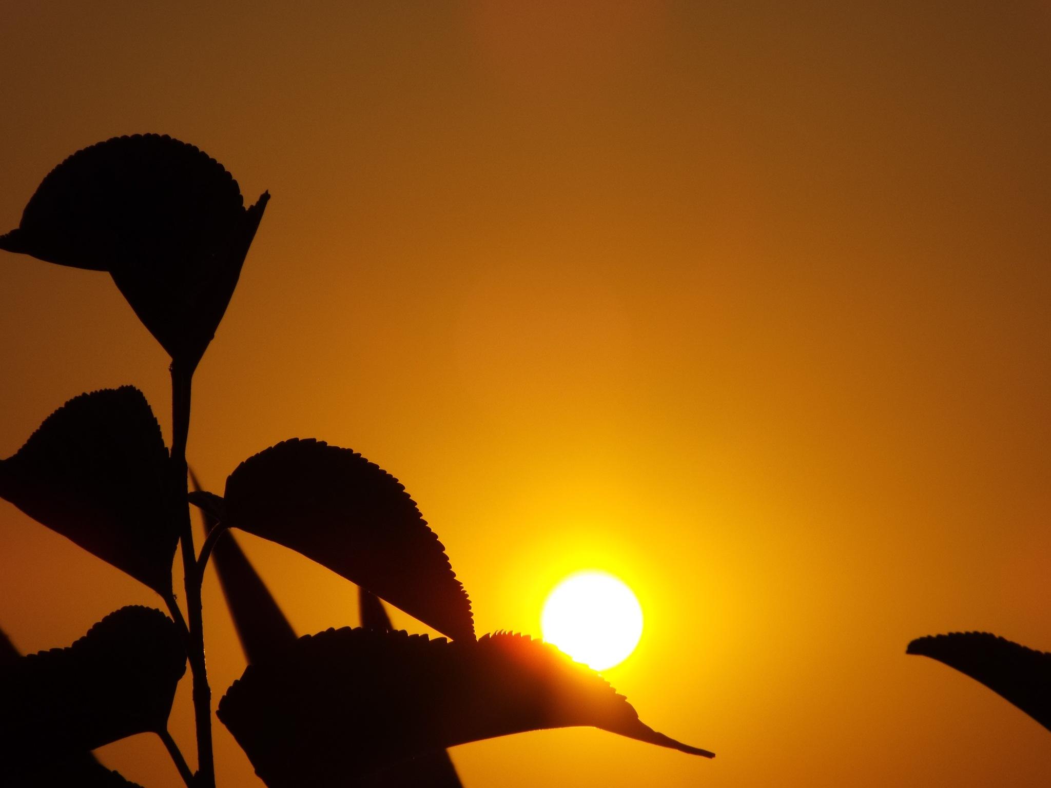 TONIGHT'S SUNSET, FULL SCREEN by Akin Saner