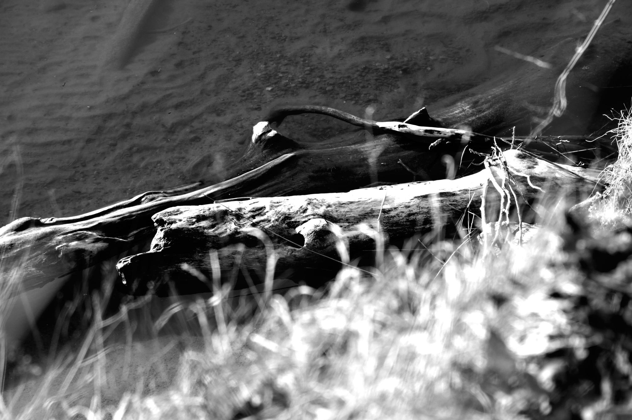 Black & QWhite by Diino