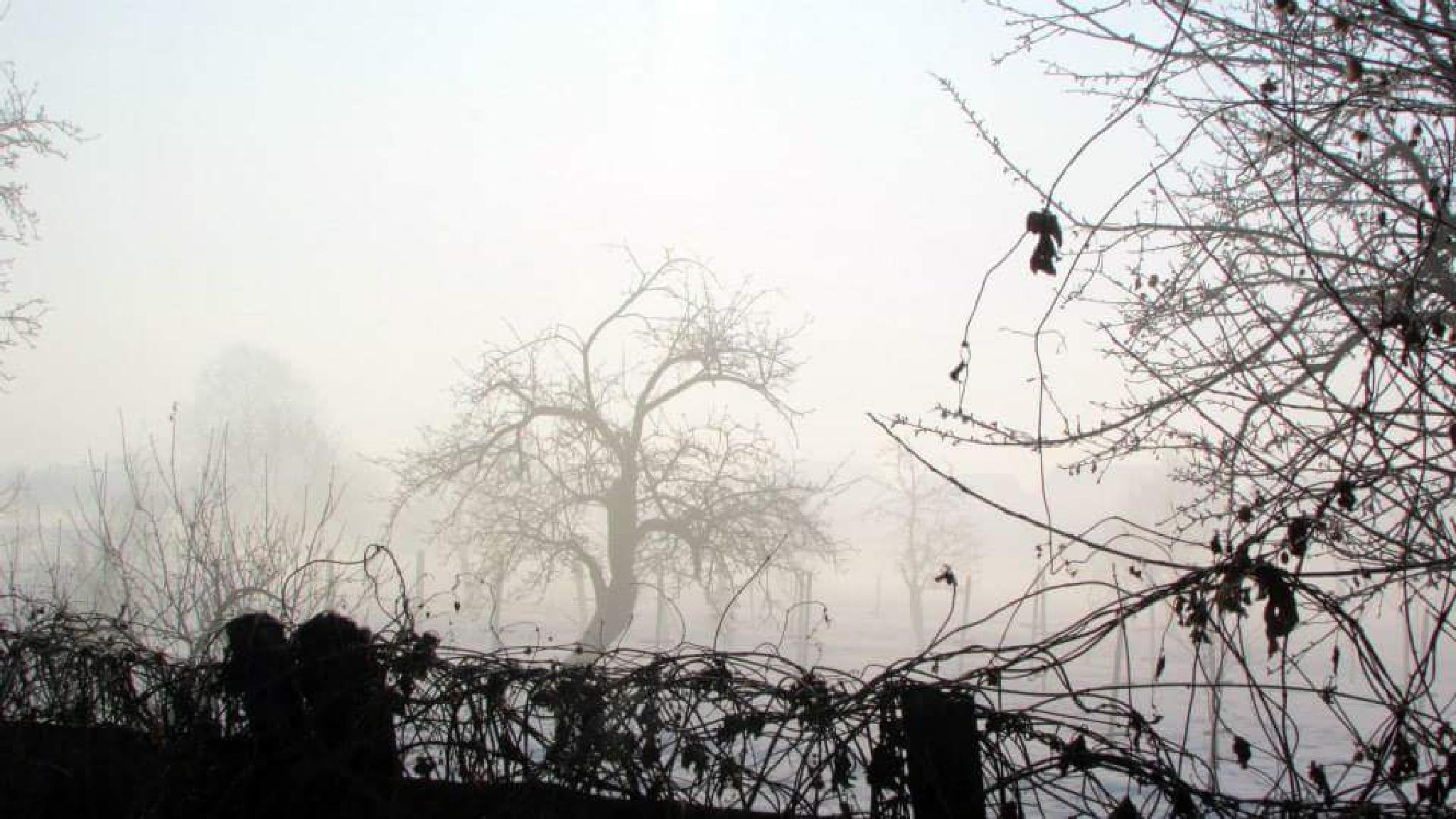 misty morning  by dundacska