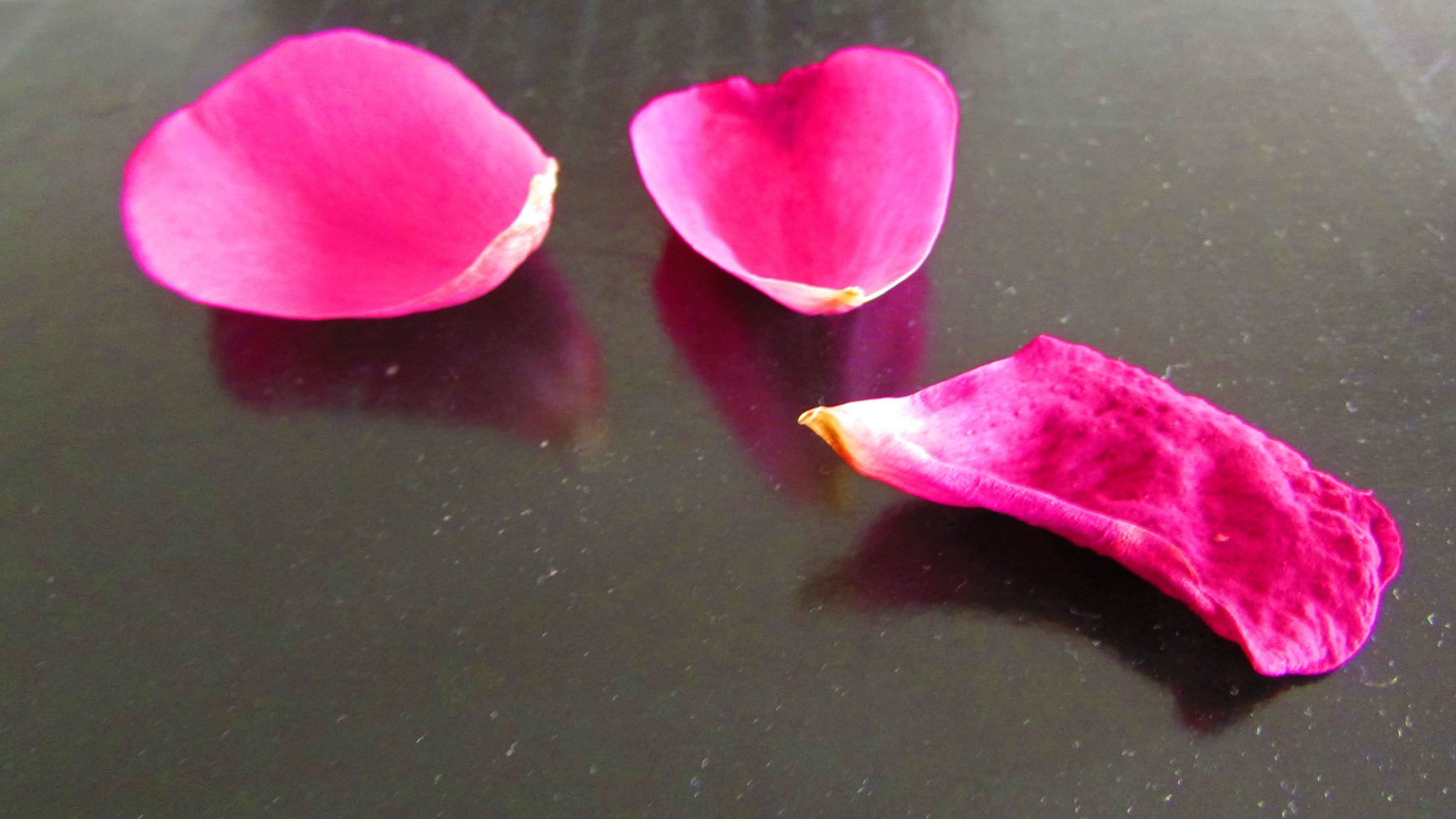 fallen petals by dundacska