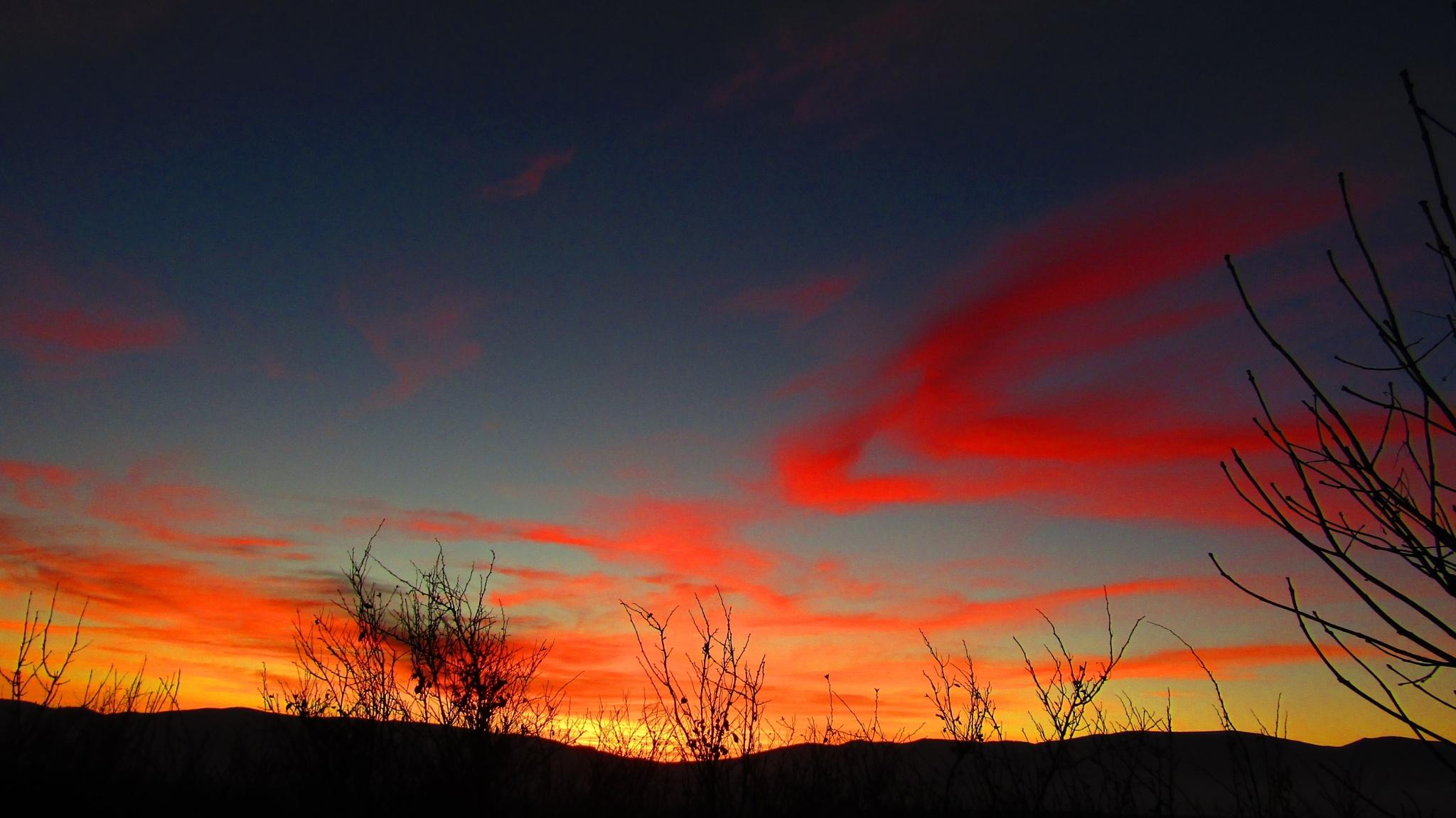 branches at sunset by dundacska