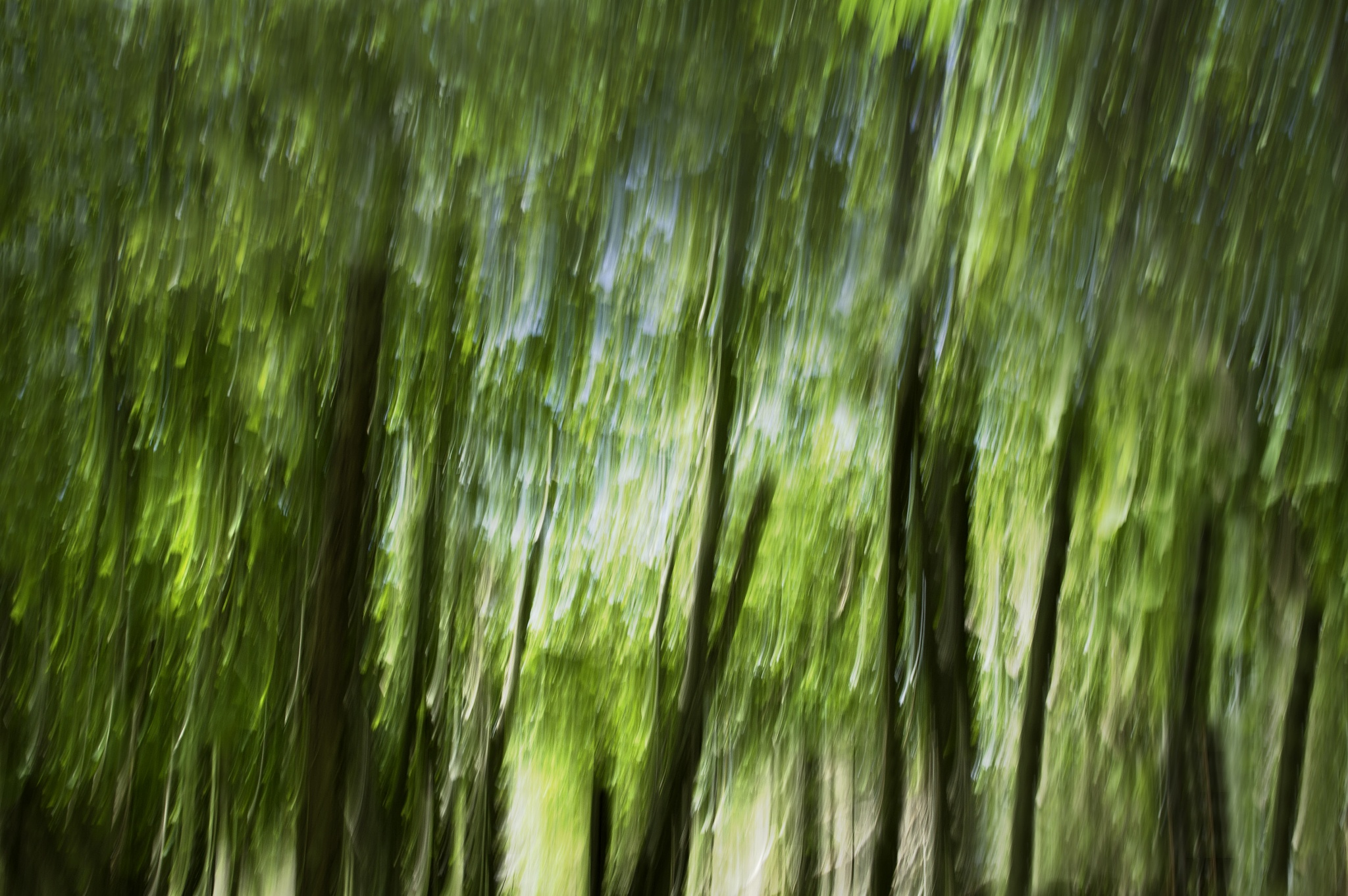 Forest in motion by Magnus Eriksson