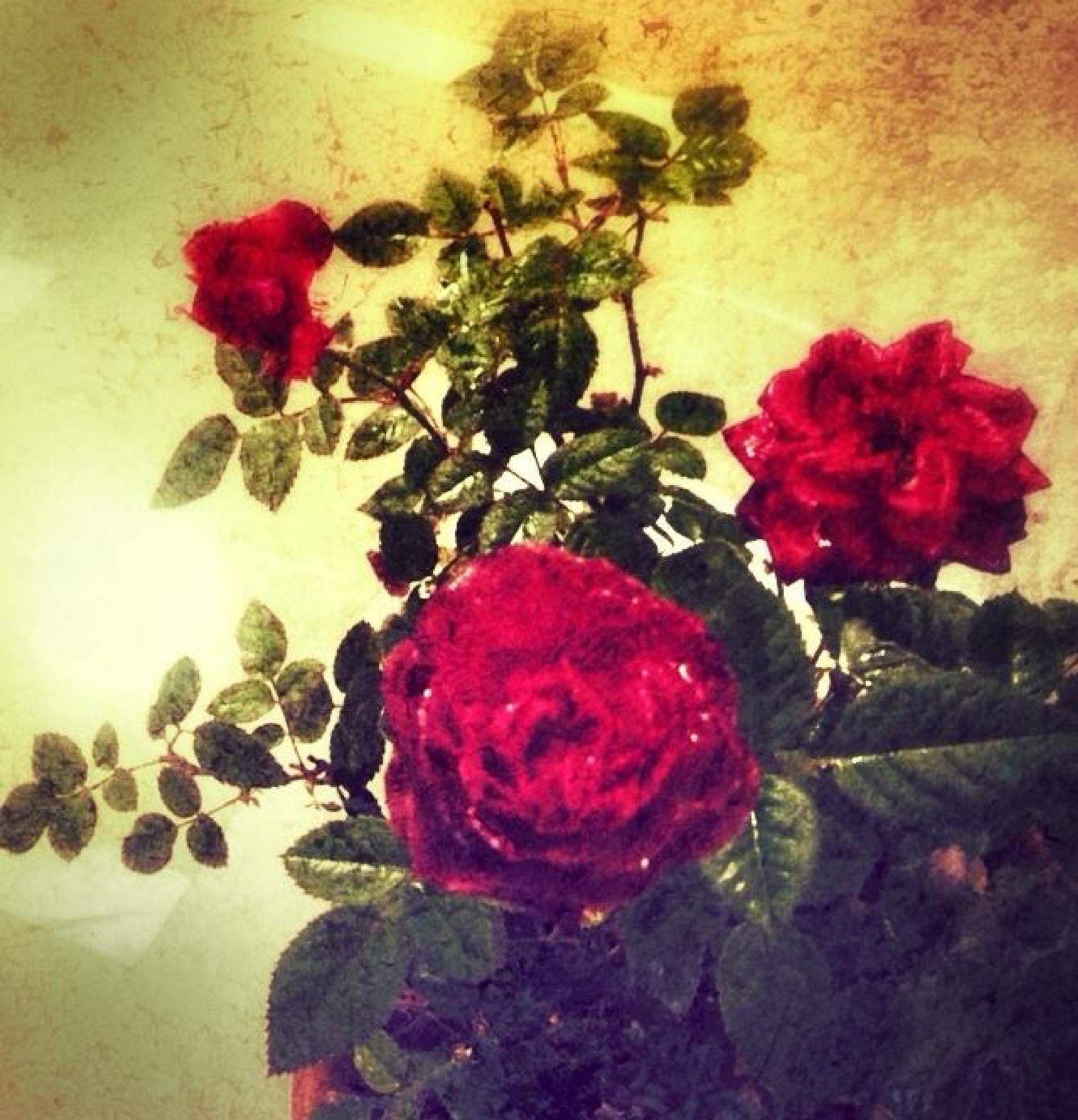 Feliz San Valentín ! by Marinela