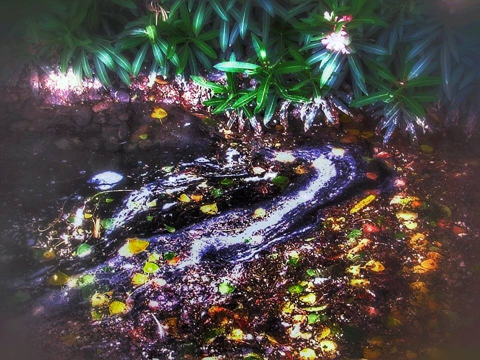 Photo in Abstract #bosque #arroyo #abstract