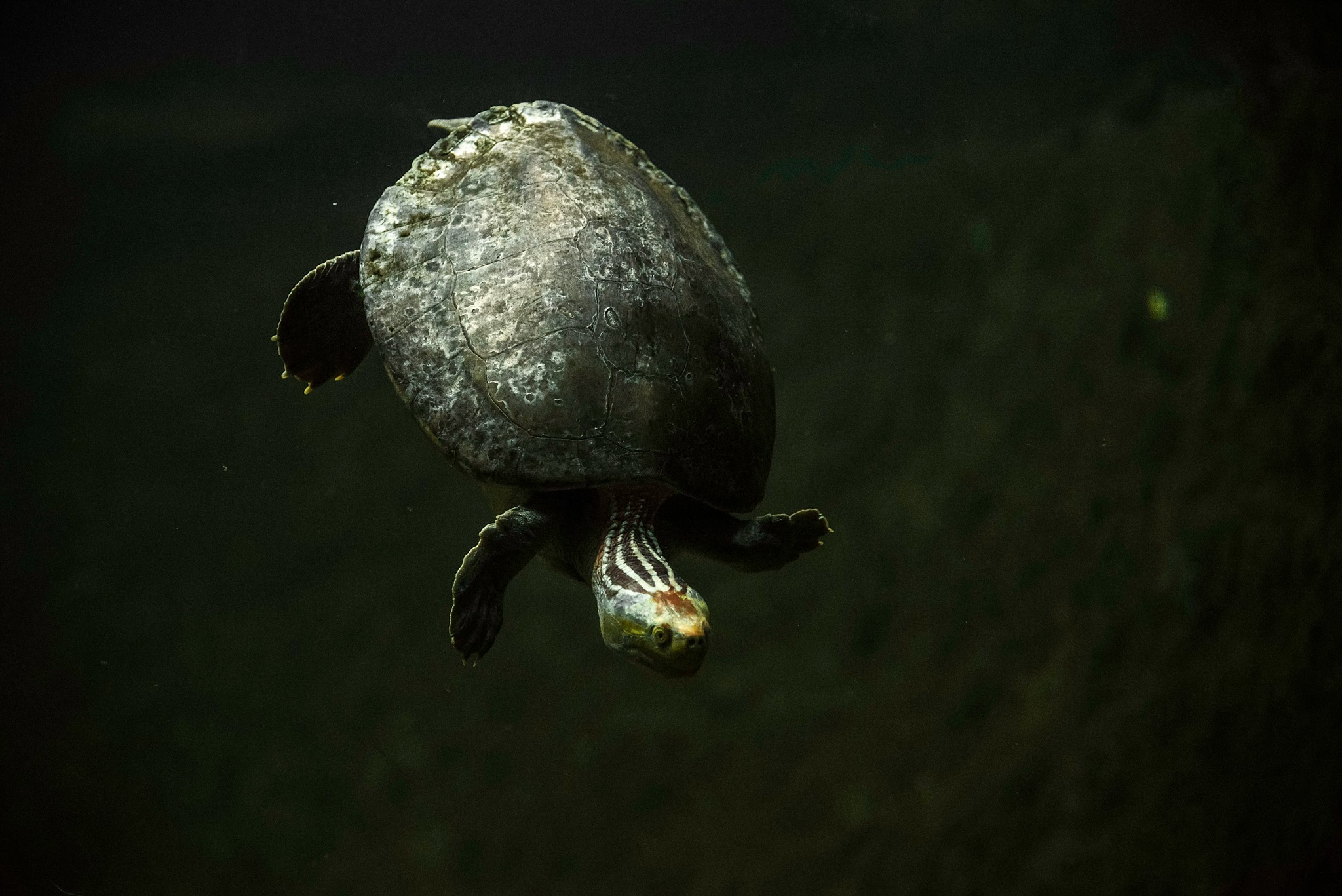 Tortoise by DevaVinoth