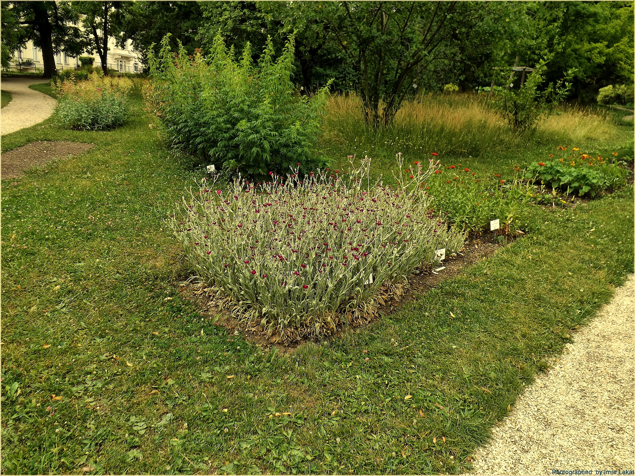 Botanical Garden of the University of Vienna  by Imre Lakat