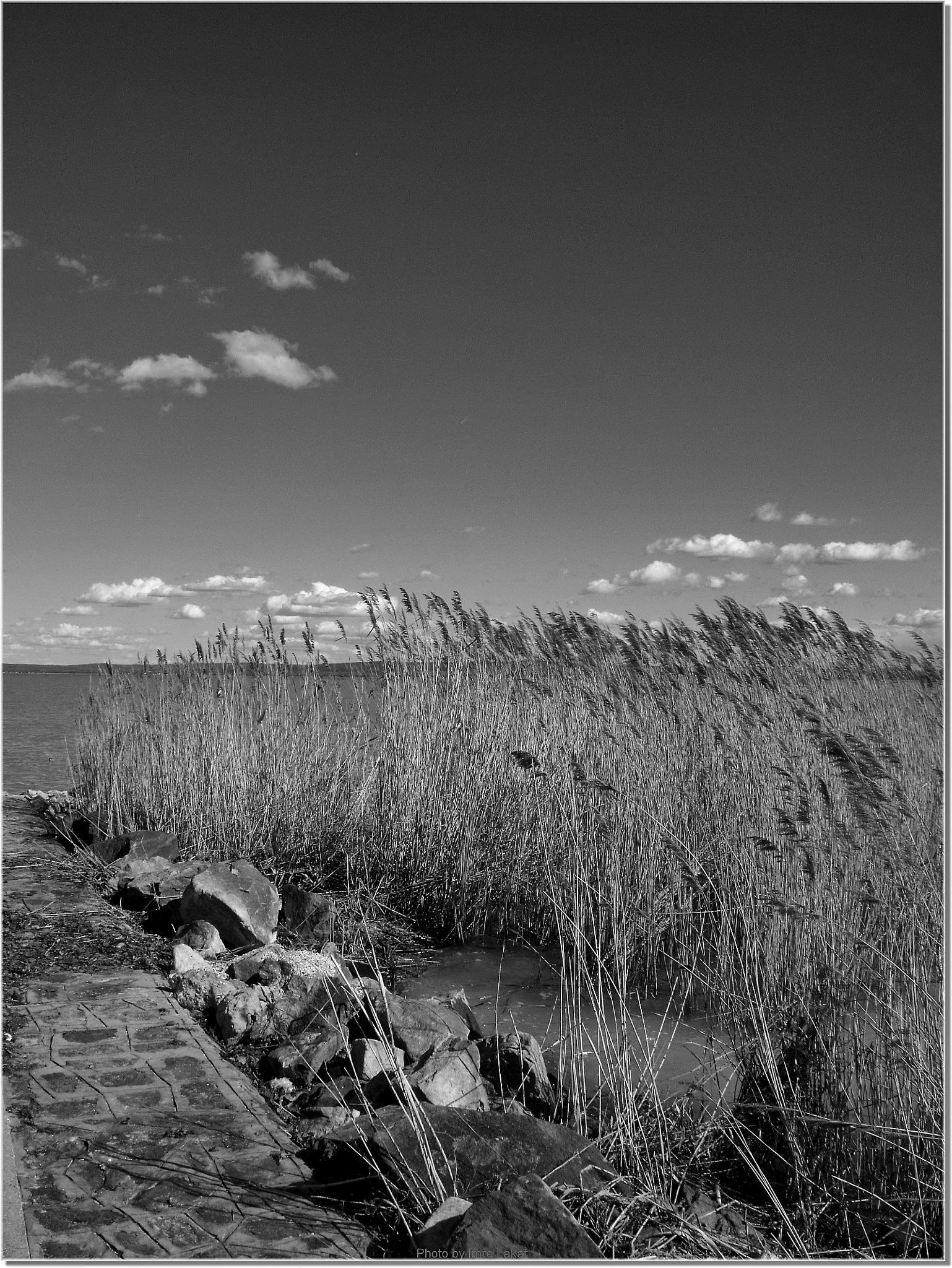 B & W . Lake Balaton in Révfülöp by Imre Lakat