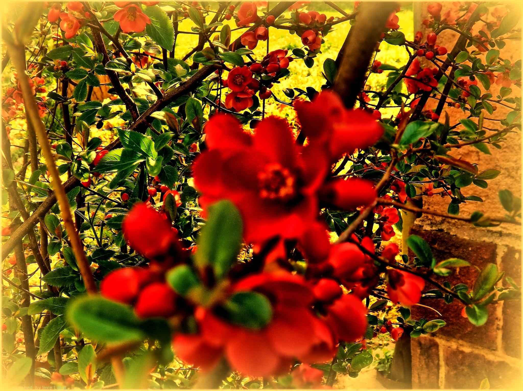 Flowers by Imre Lakat