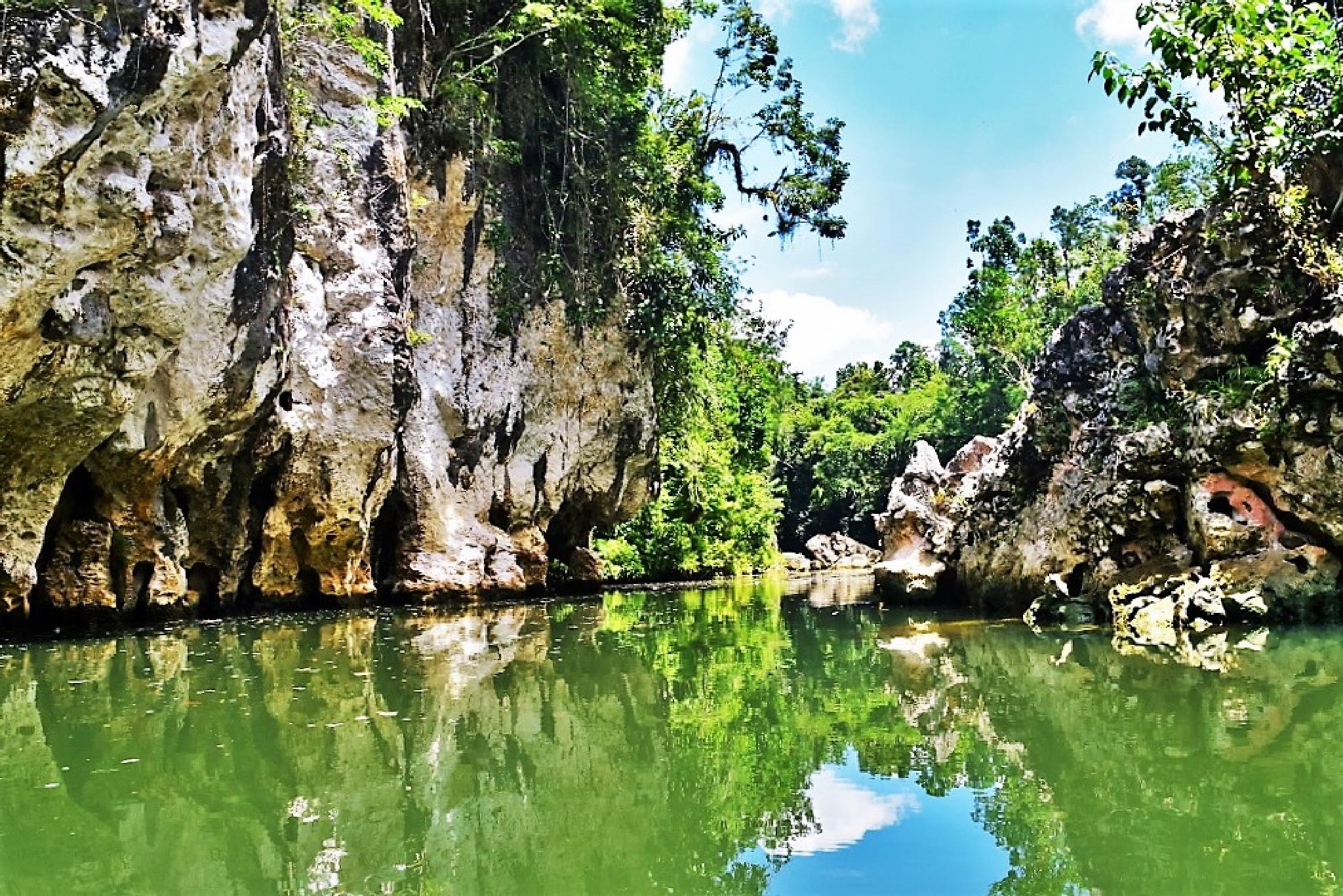 By Way Of A River... A Tropical Forest Is Cut Through  by Leonardo Penaranda