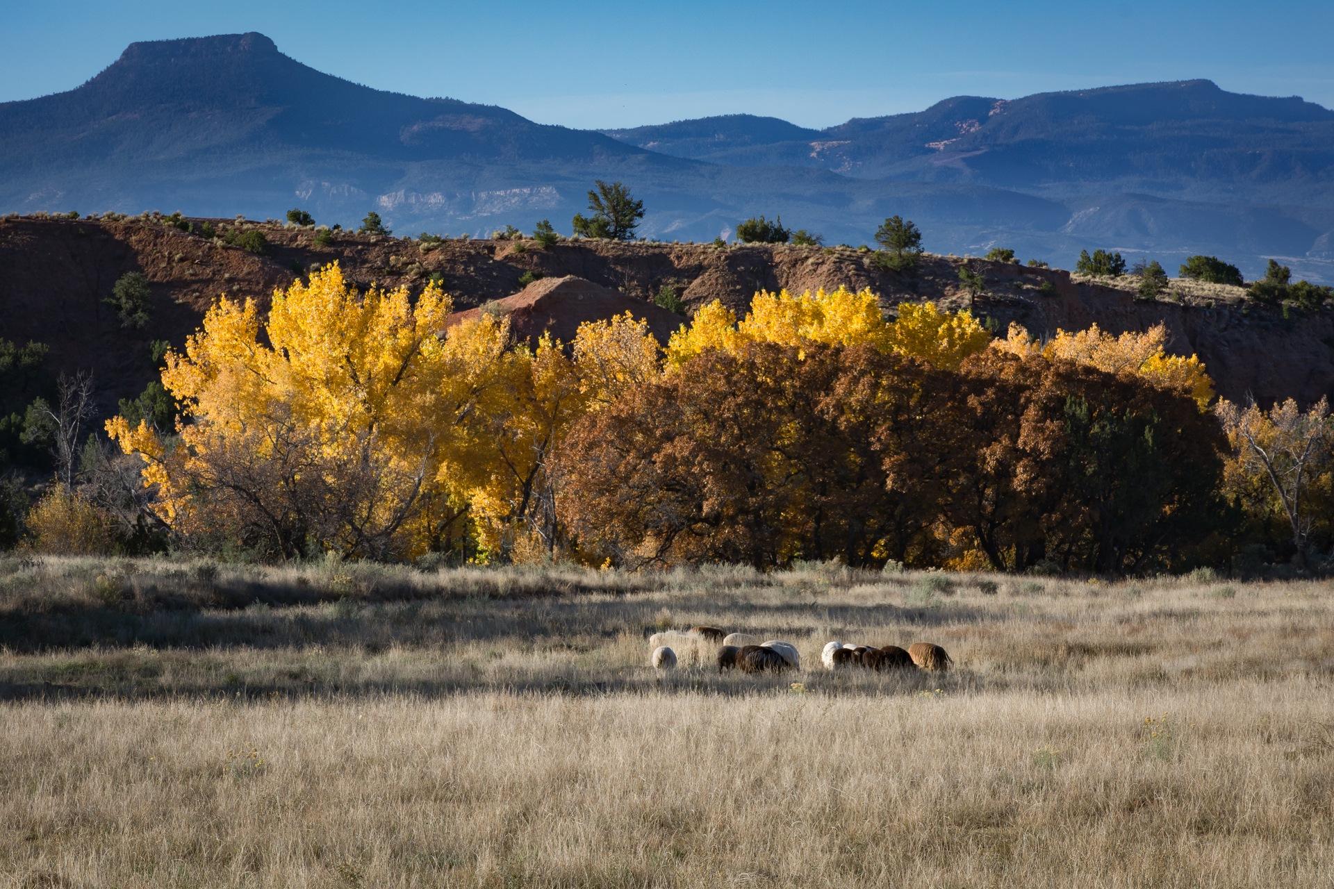 Ghost Ranch & Pedernal by Martyn Howgill