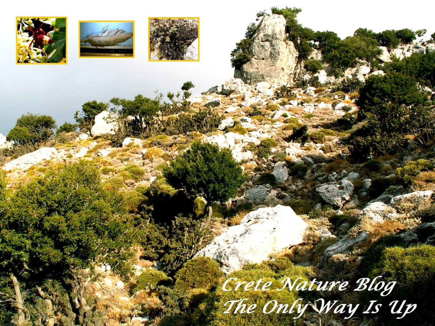 Crete Nature Blog: The Only way is Up by stevessummerbook