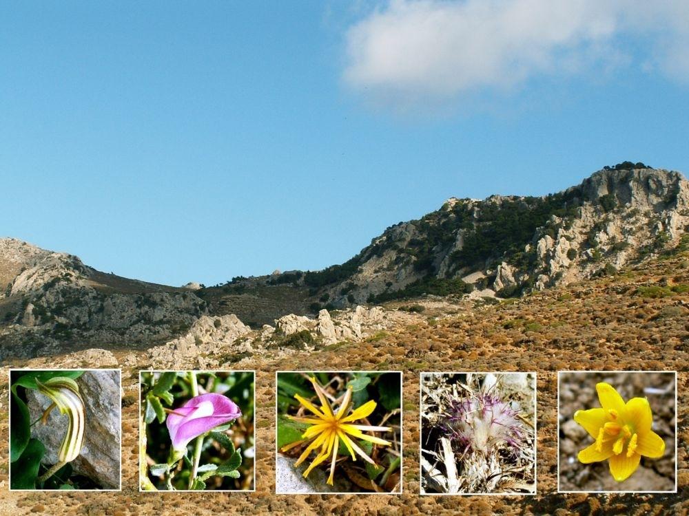 Flowers of the Cretan Uplands by stevessummerbook