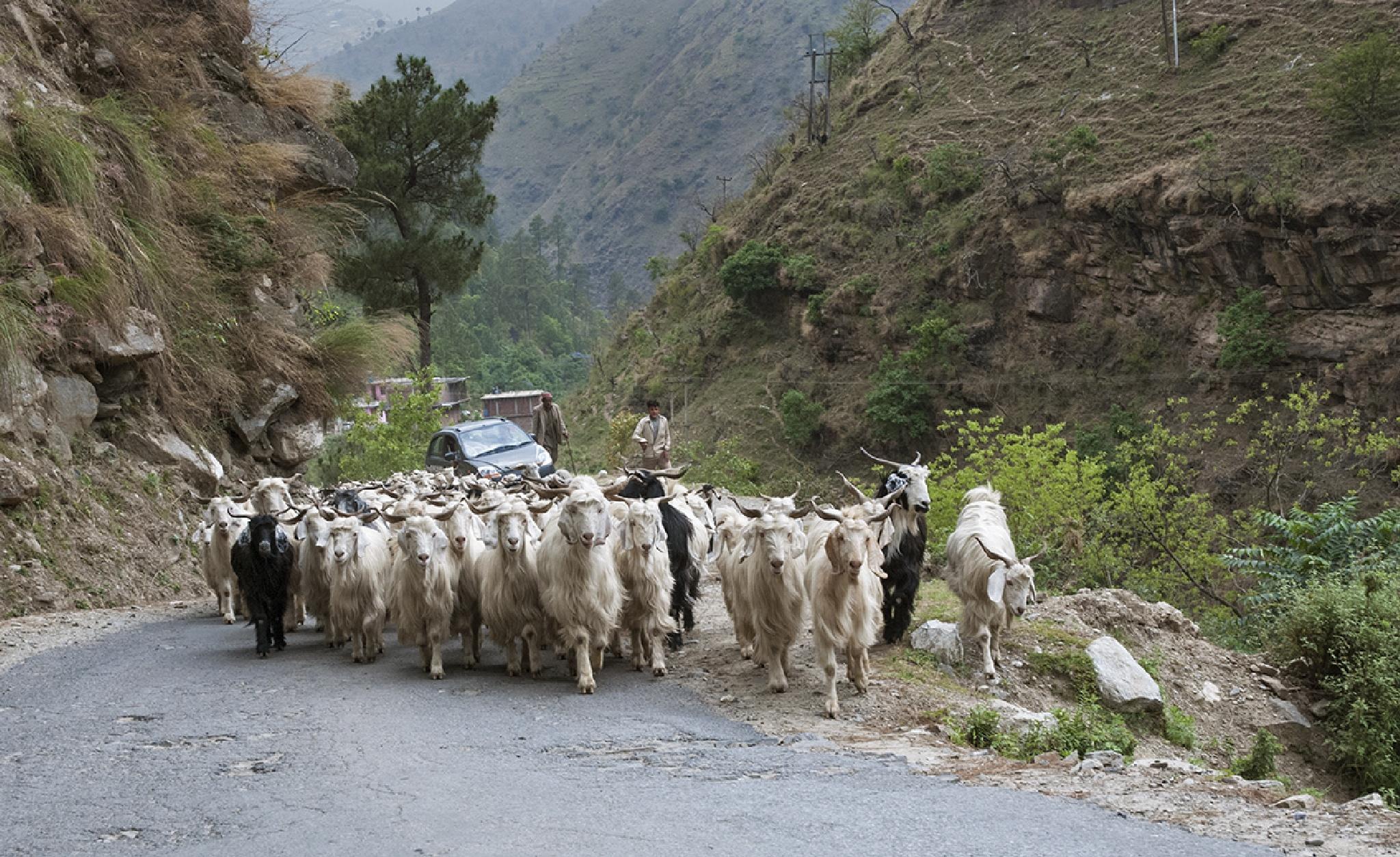 Traffic Jam by Saurabh Bhattacharyya