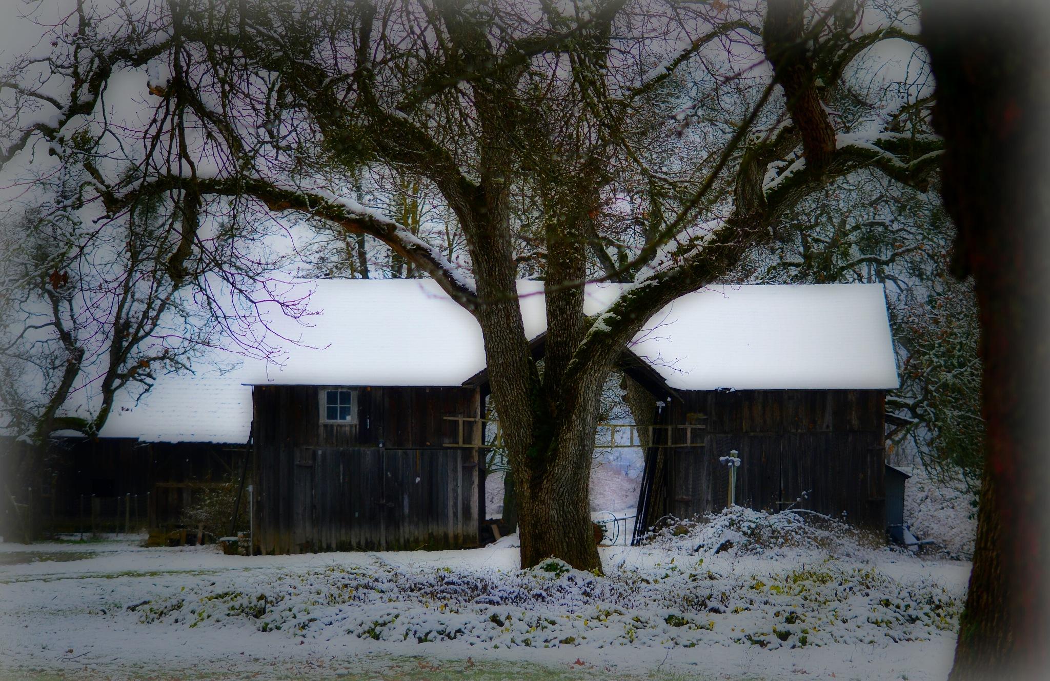 Old Oak barn by Diana Orey