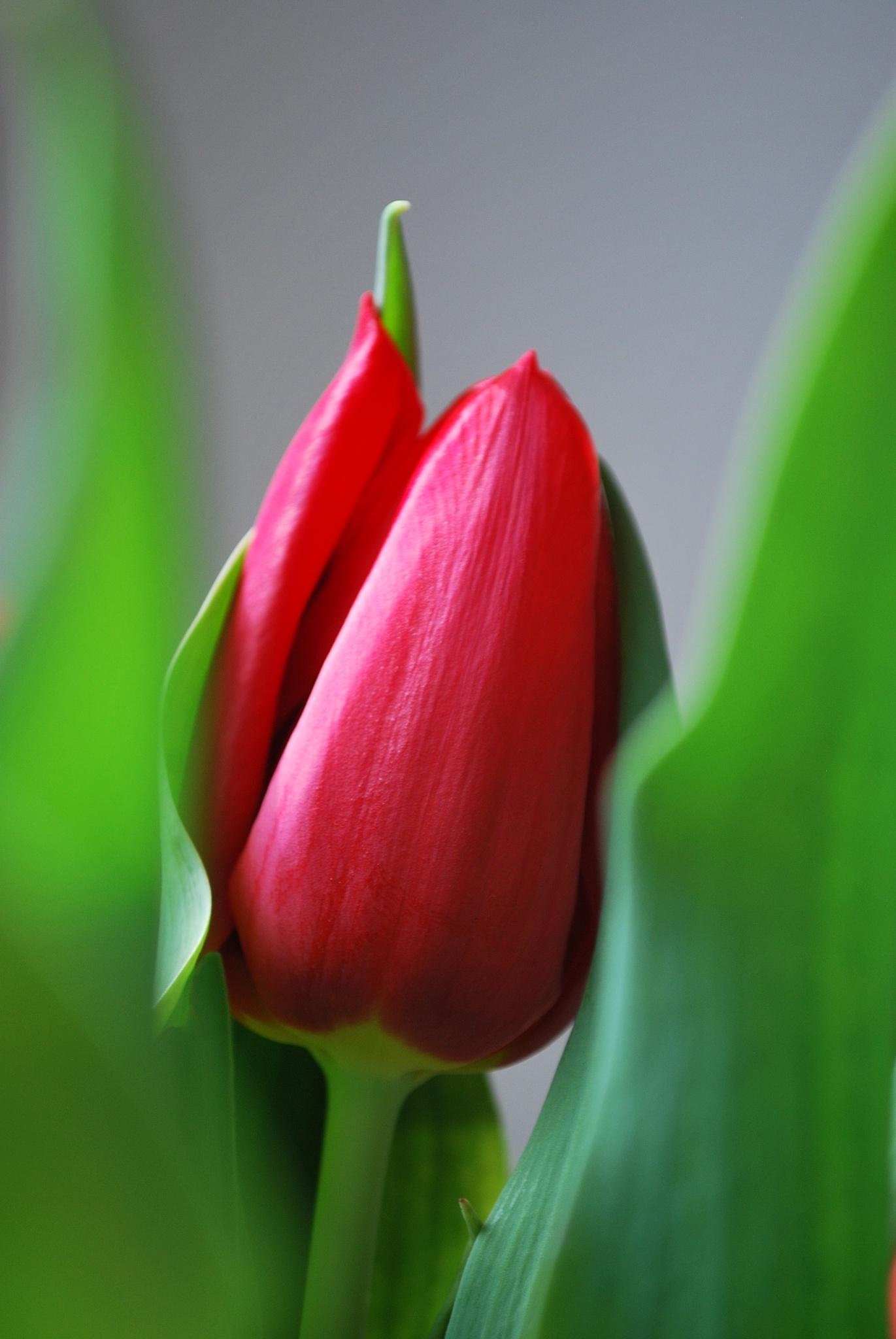 Thinking of spring by Elena Stanescu Bellu