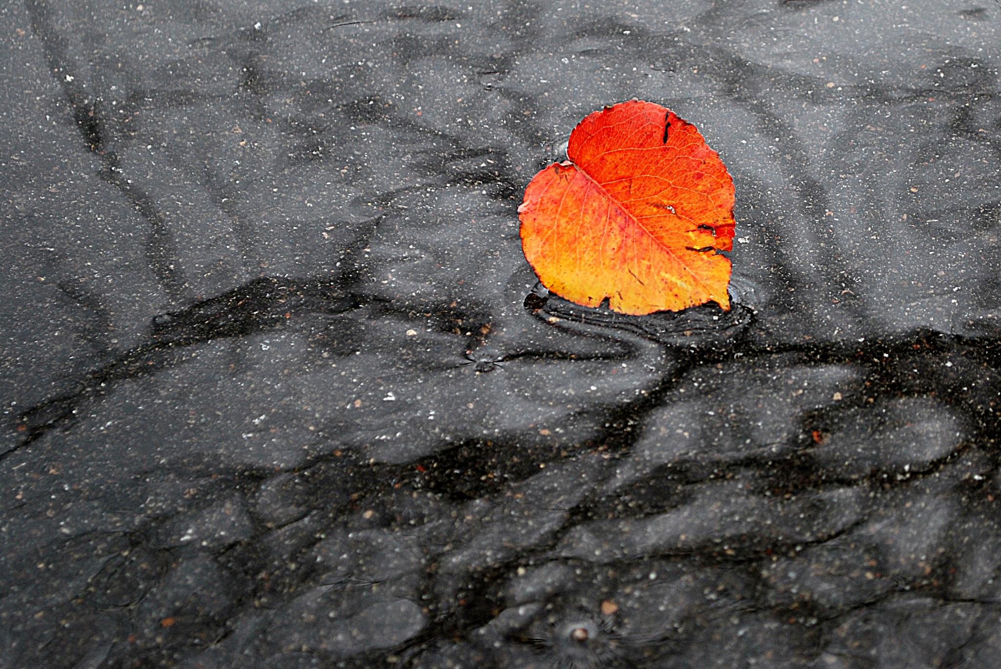 Leaf in Water by Elena Stanescu Bellu