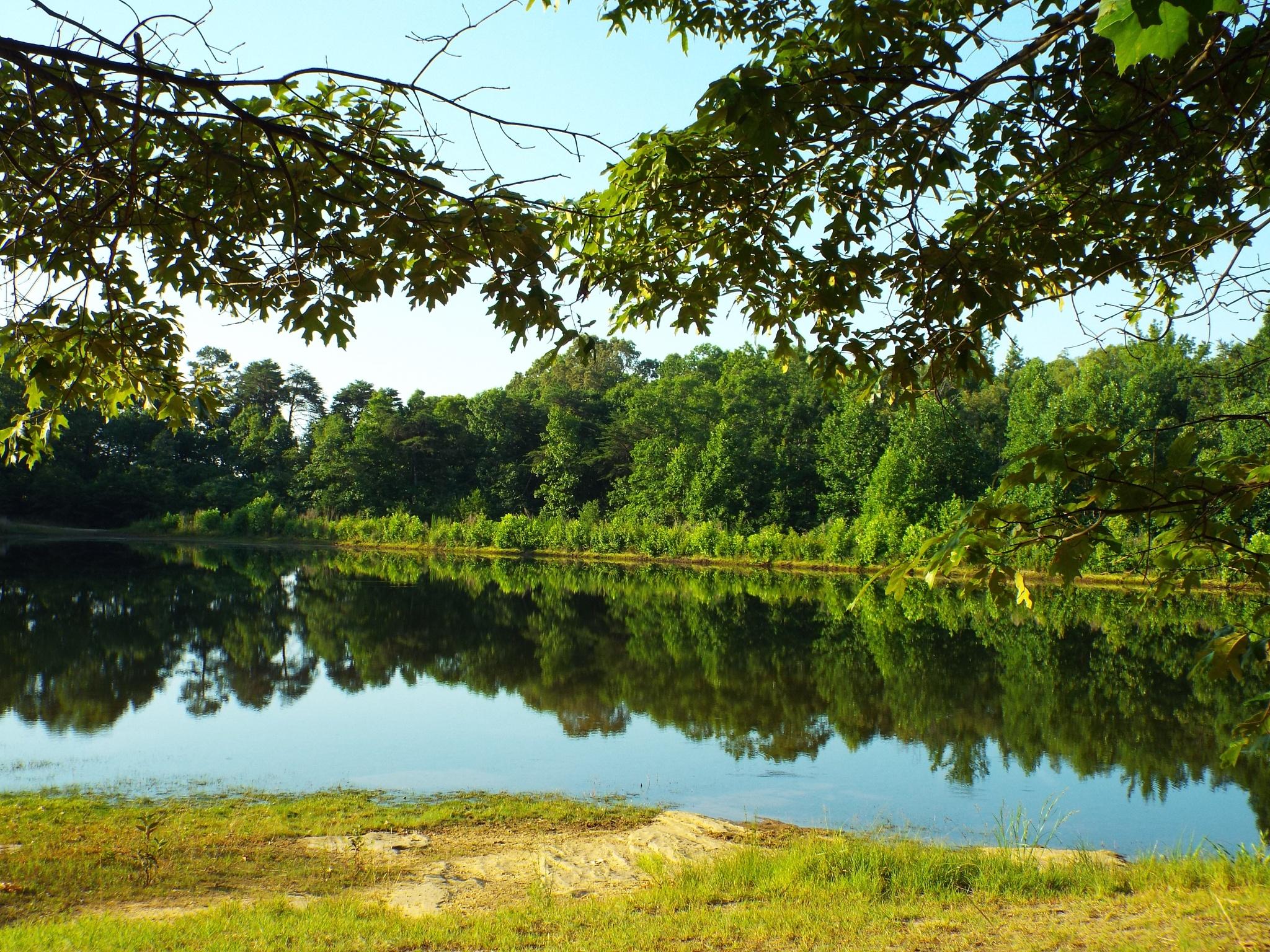 Serenity Lake  by Alex Ingram