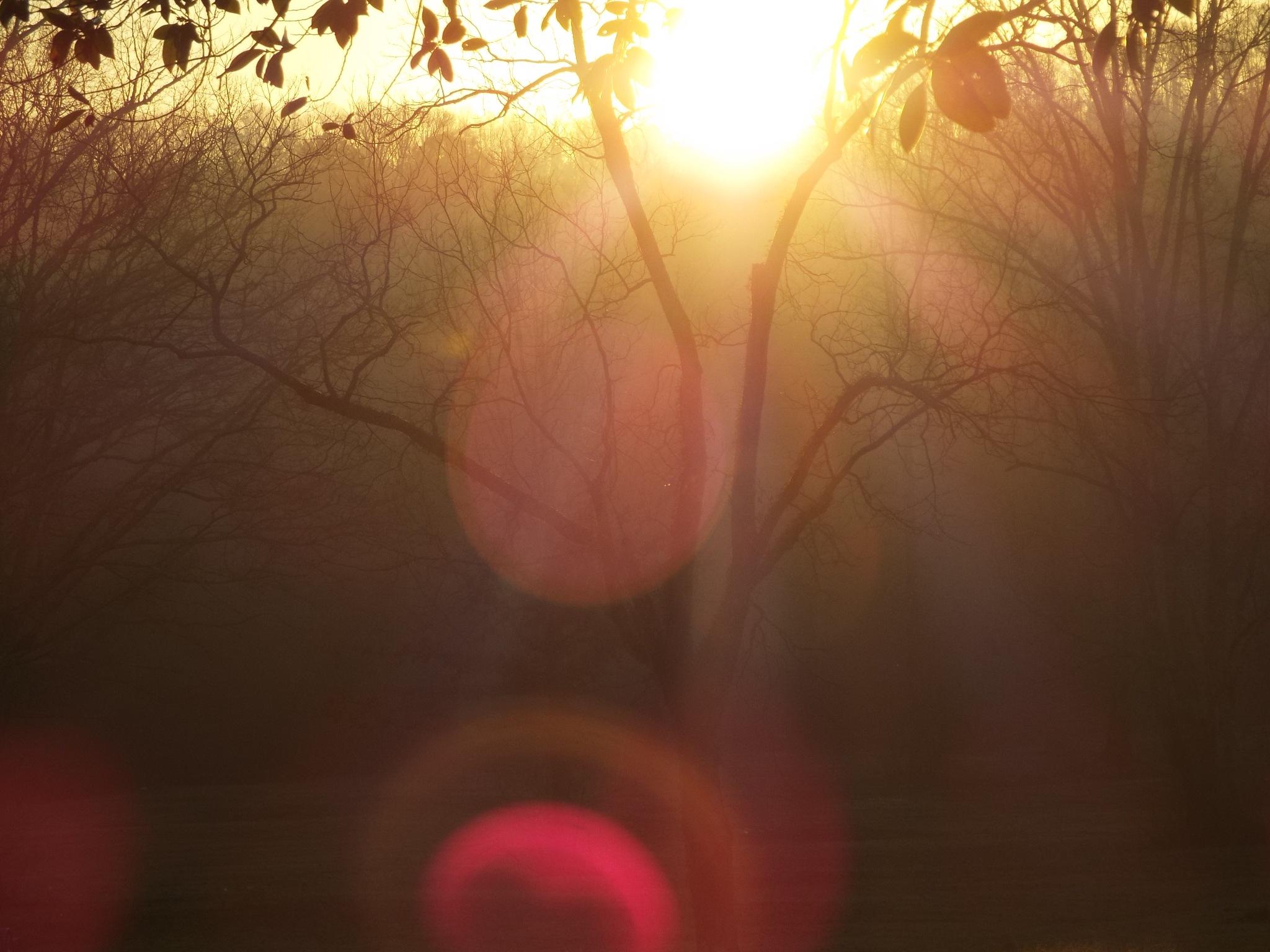 Dawn Flare by Alex Ingram