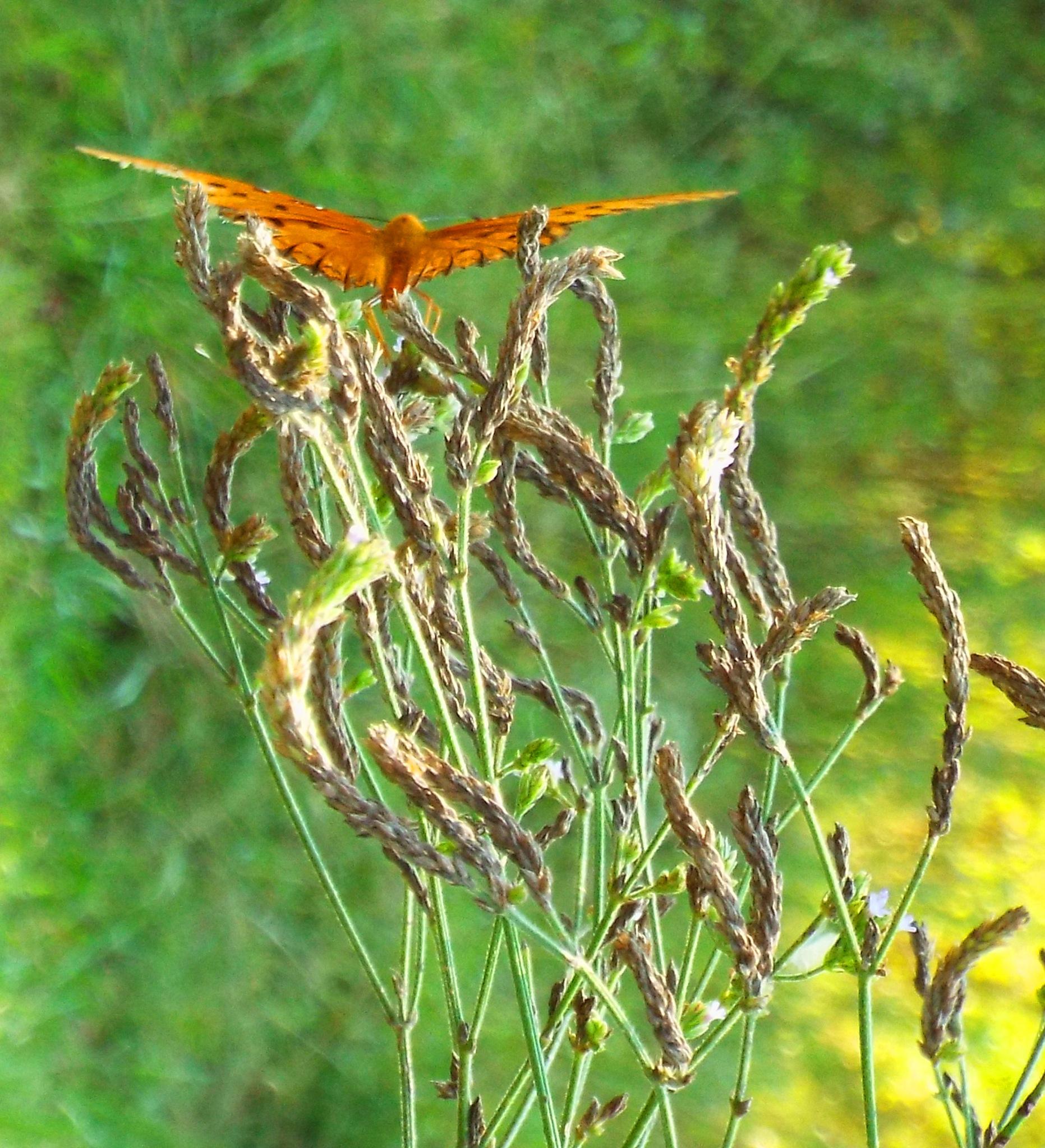 So many butterfly, so little time by Alex Ingram