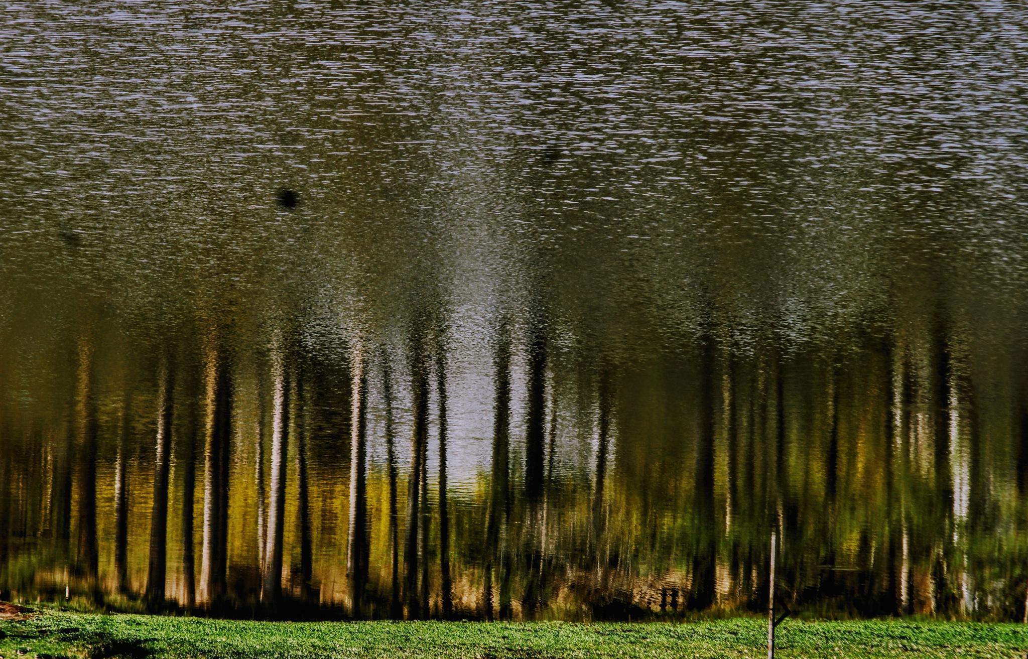 Untitled by guto monteiro
