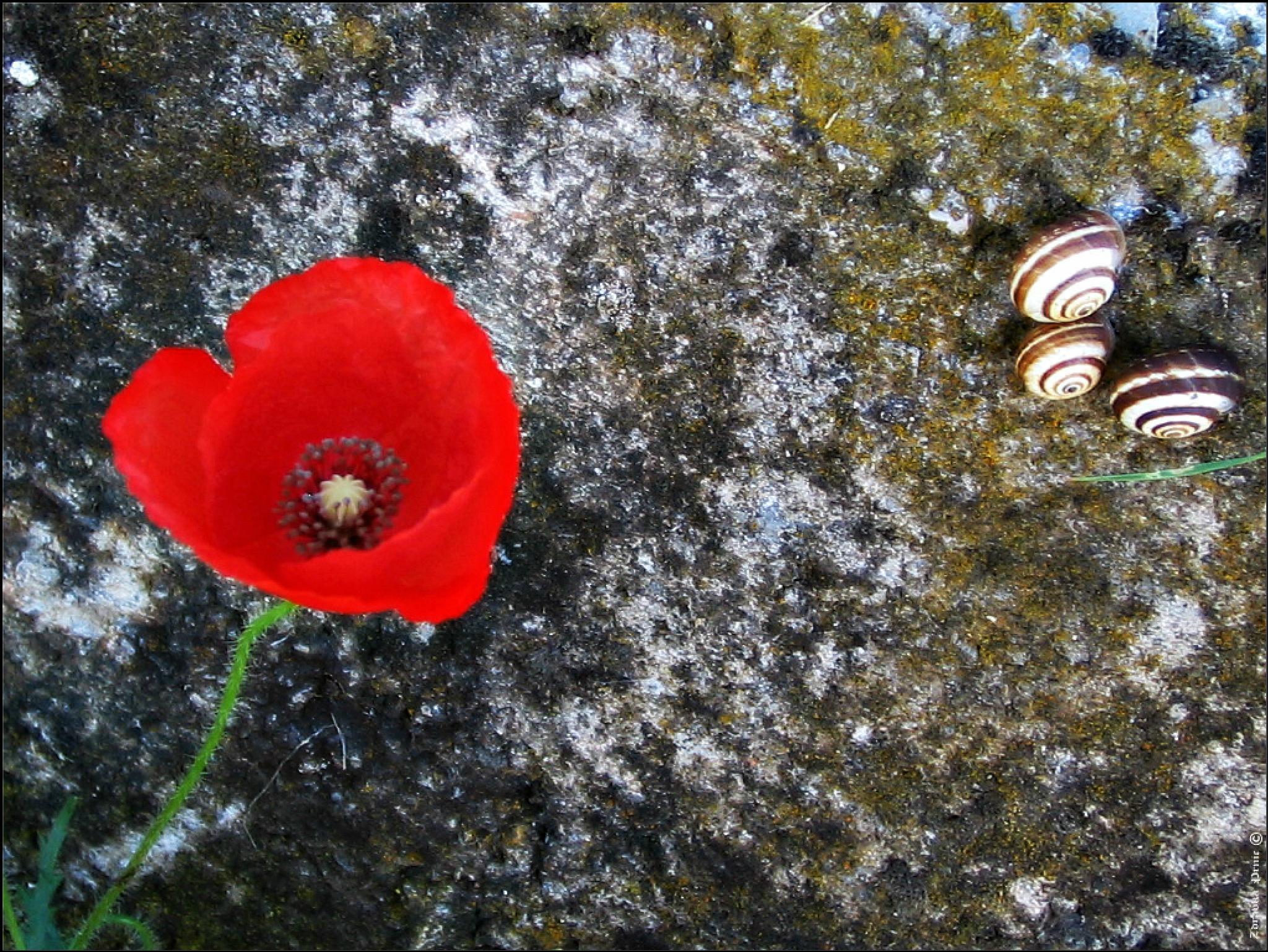 Stone of my heart by zdravka prnic