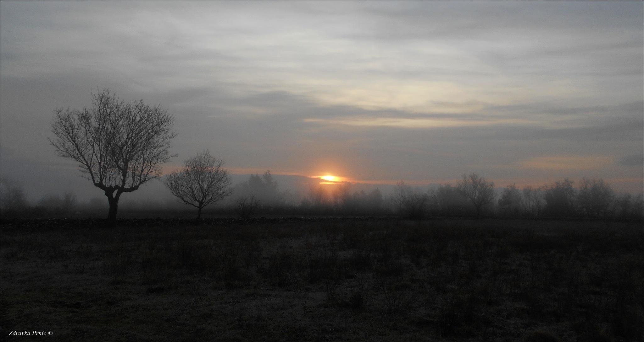 Good morning sunshine by zdravka prnic