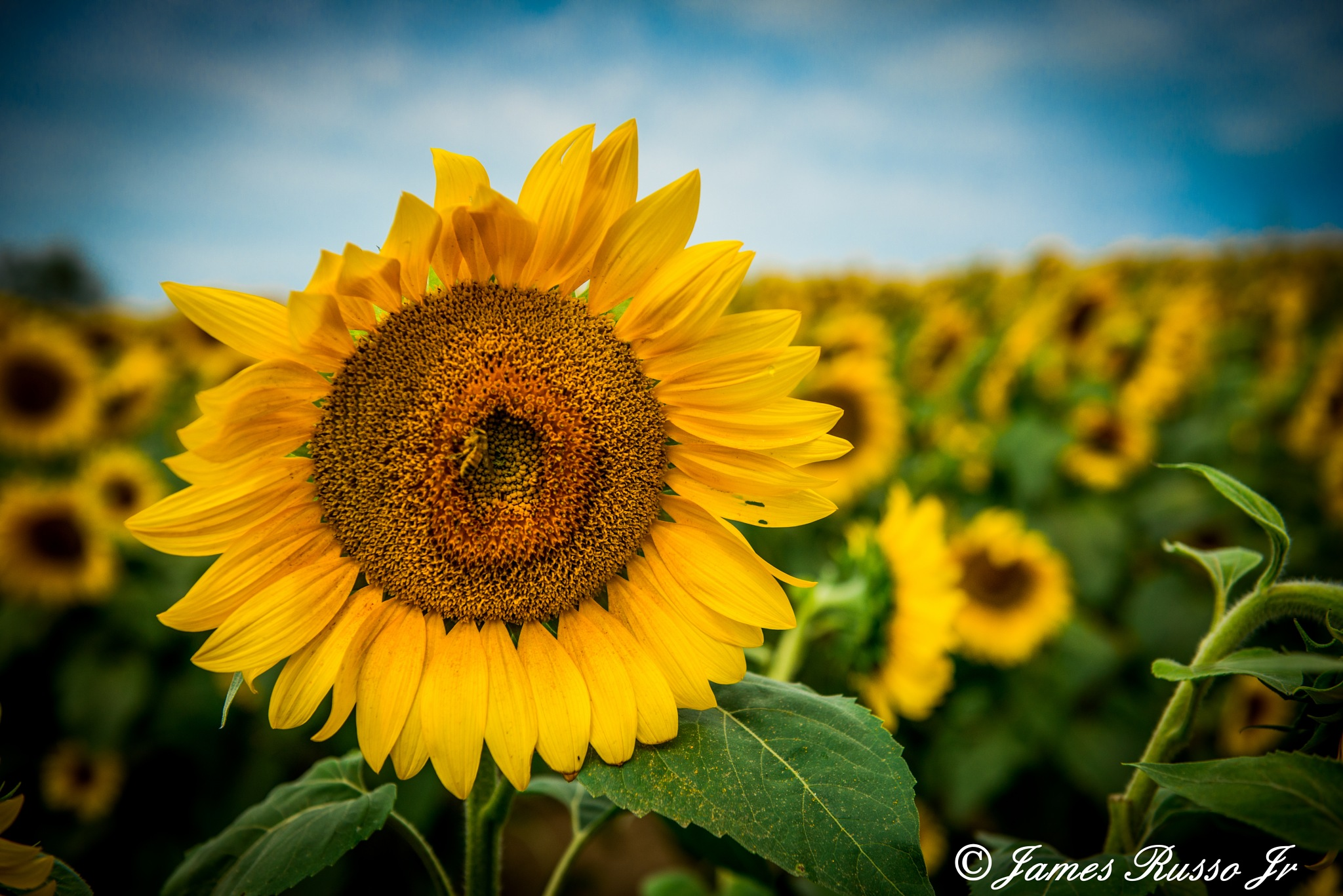 Flower Power by James Russo