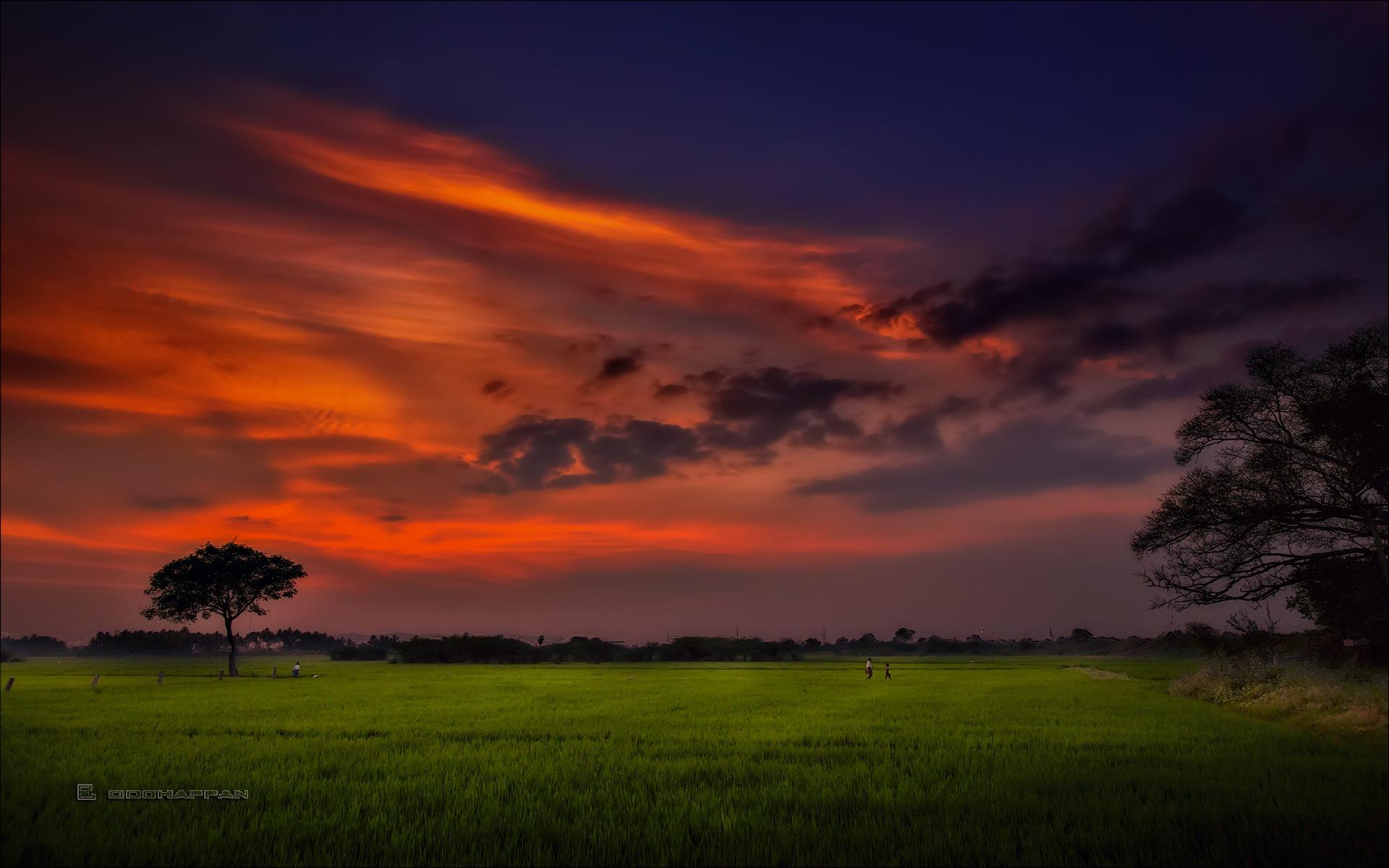 Panangadi rice field after sundown by oochappan