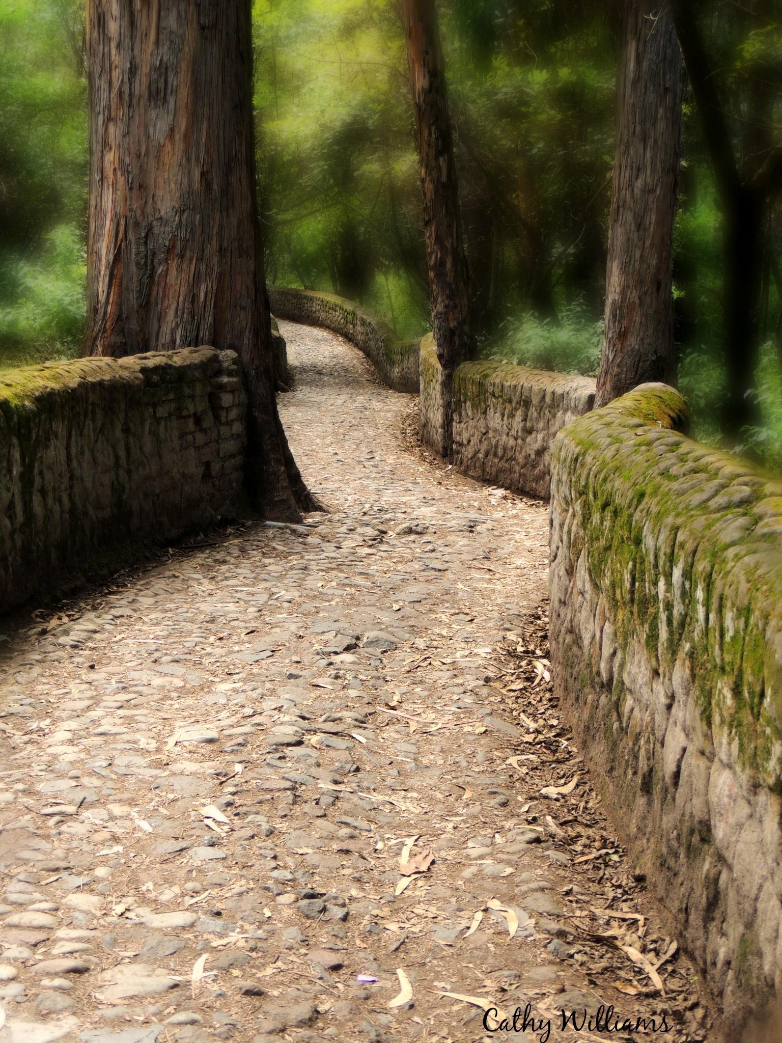 Path to the Cascada - Ecuador by catwillo
