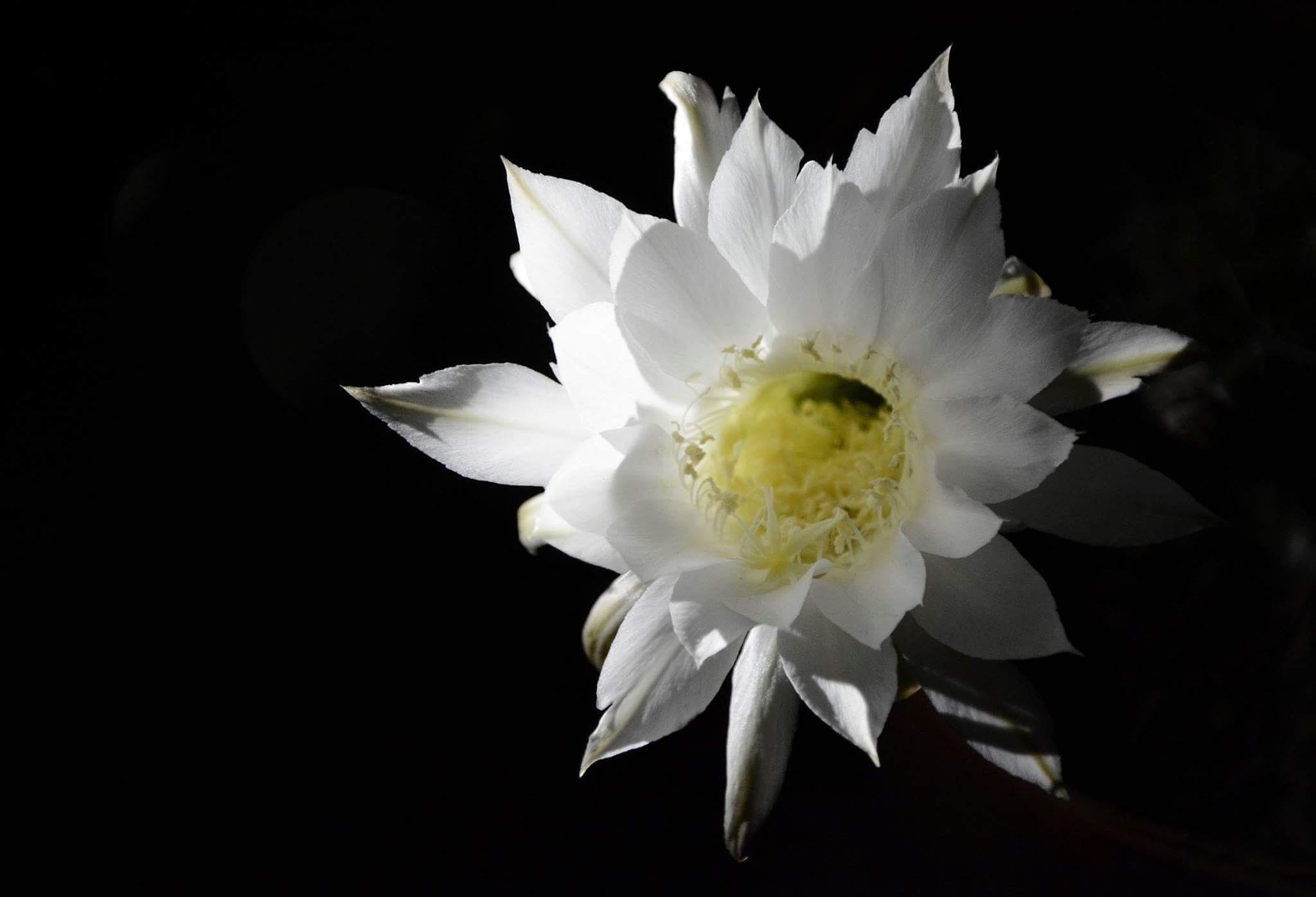 flor de cactu! by July Pilotto