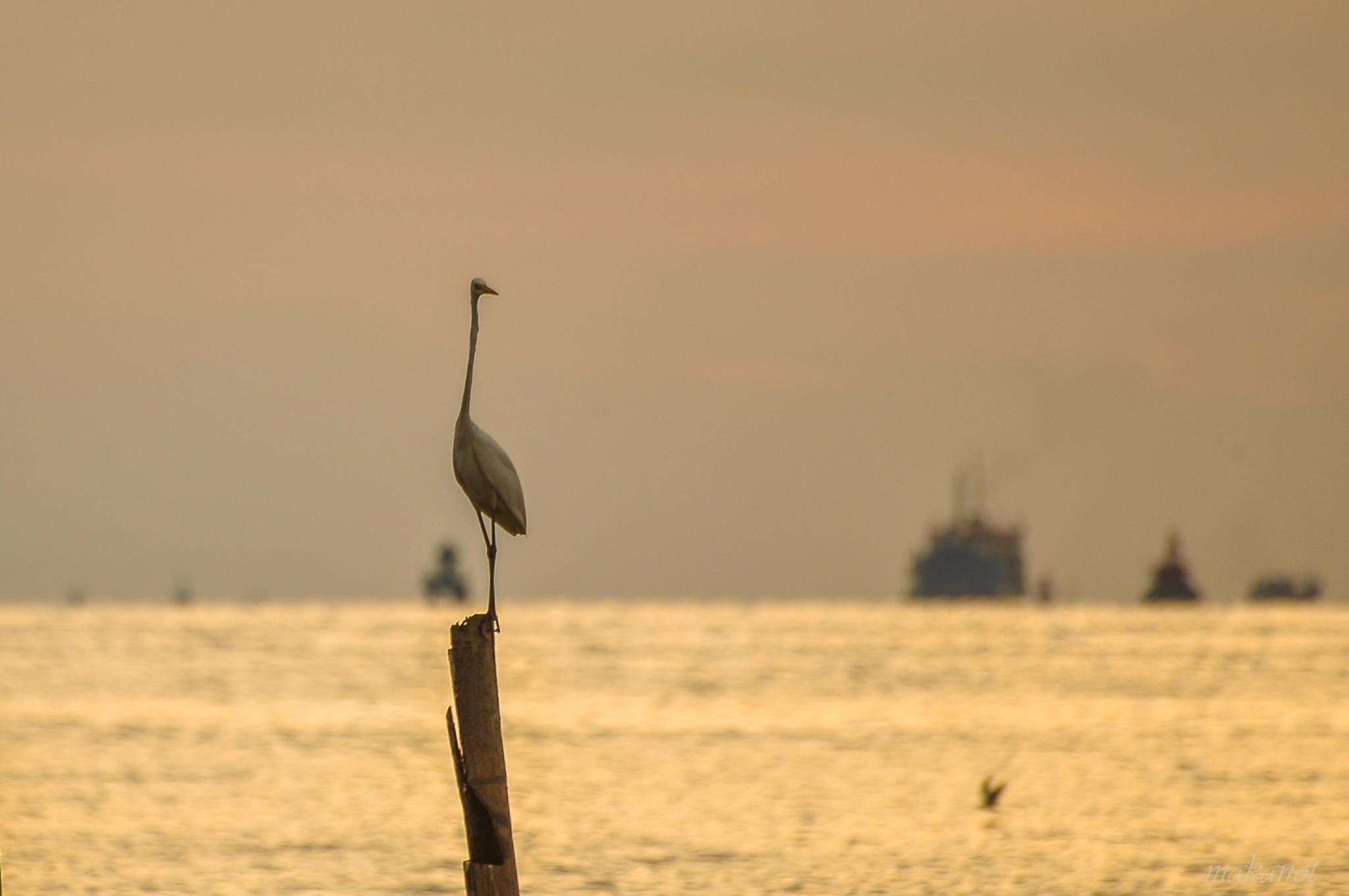Egret story by mnzmatnot