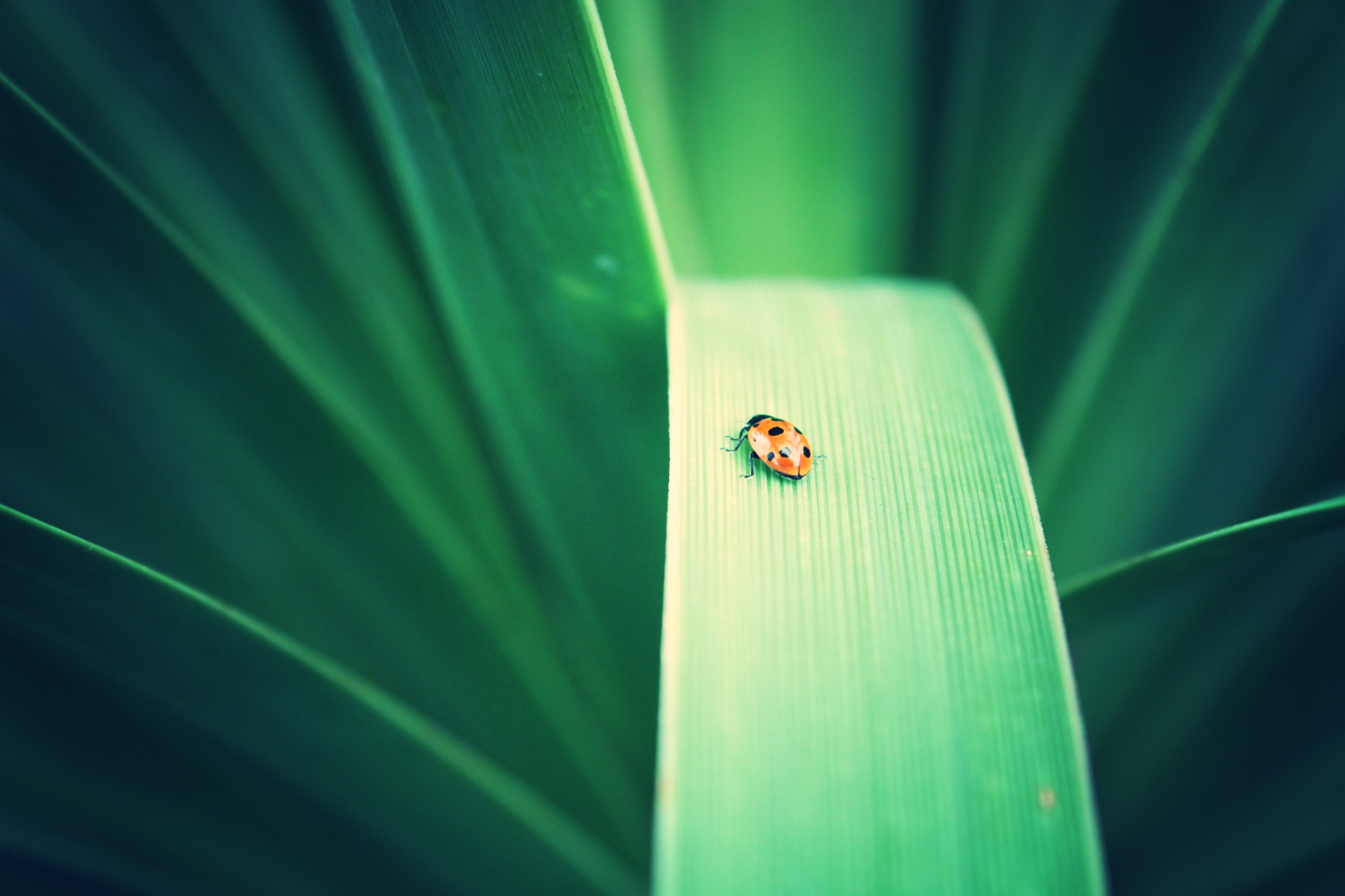 Lady Bug by easybreezy
