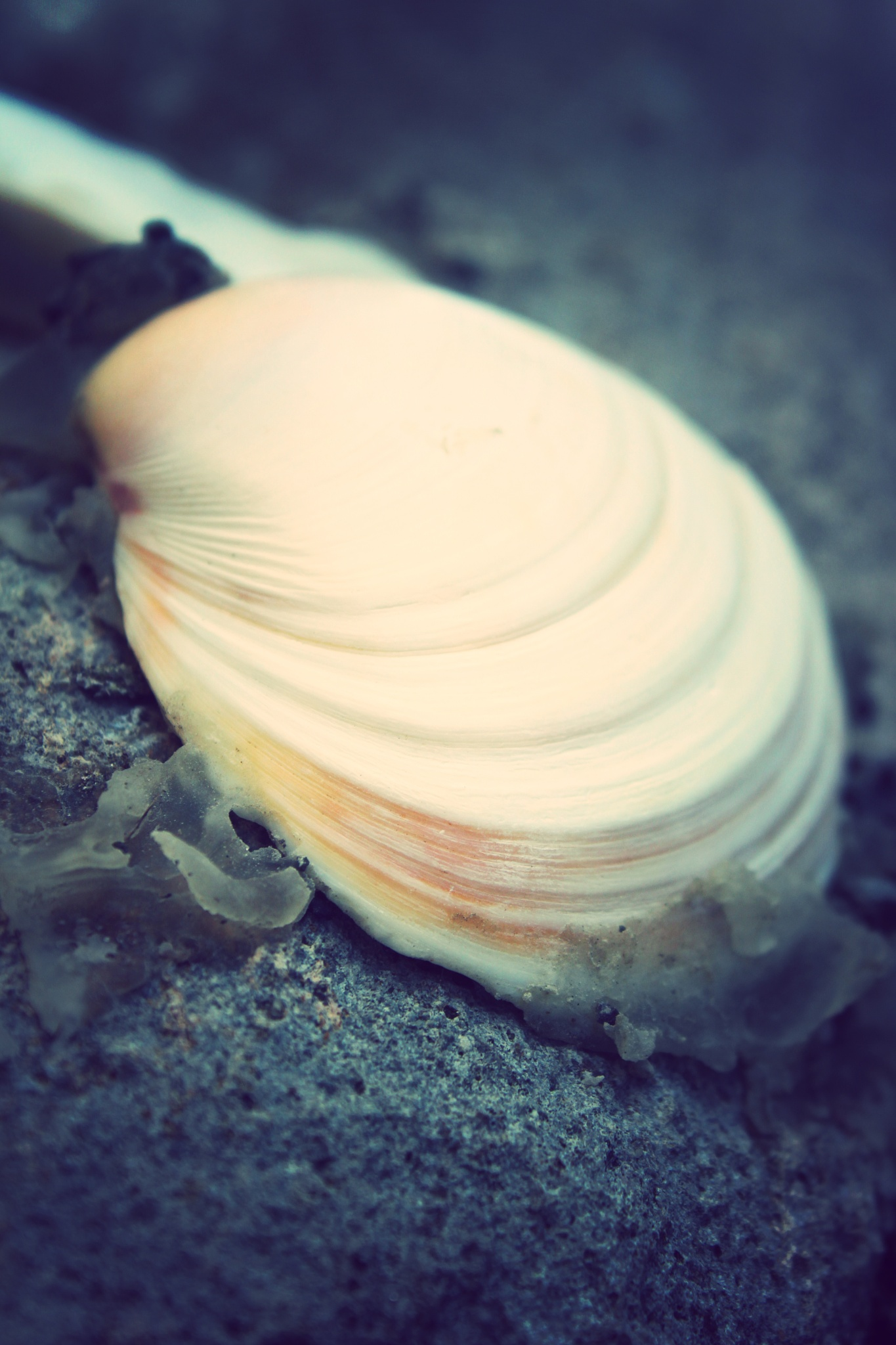 Shell by easybreezy