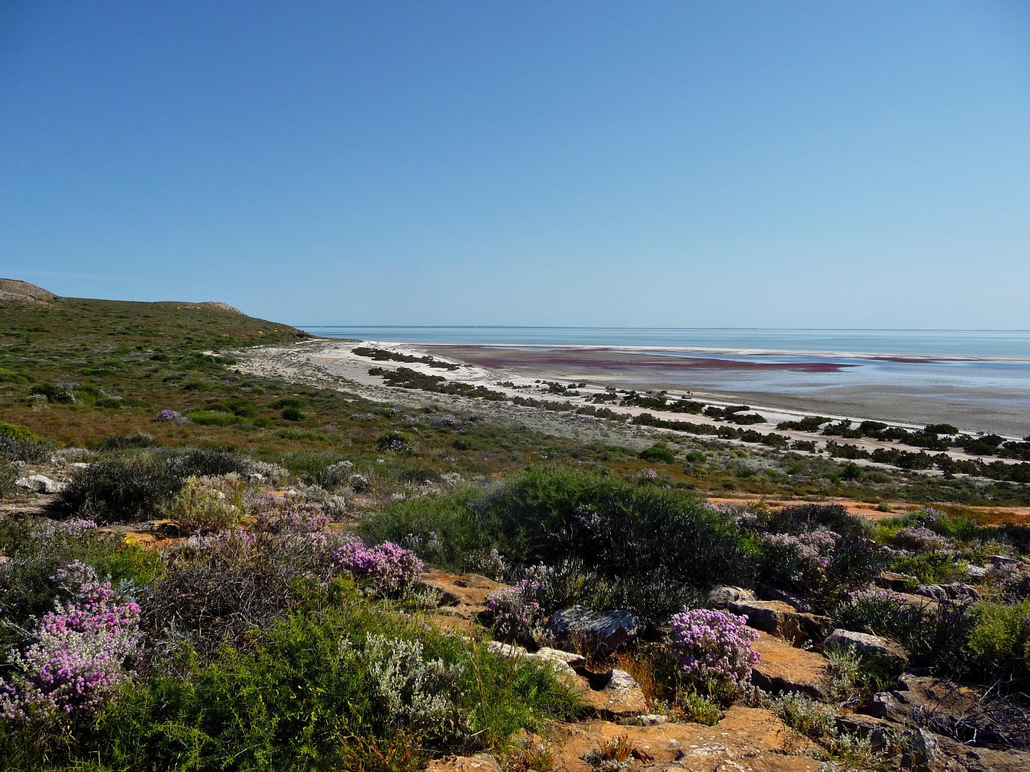 Shark bay coastline. by Rovert