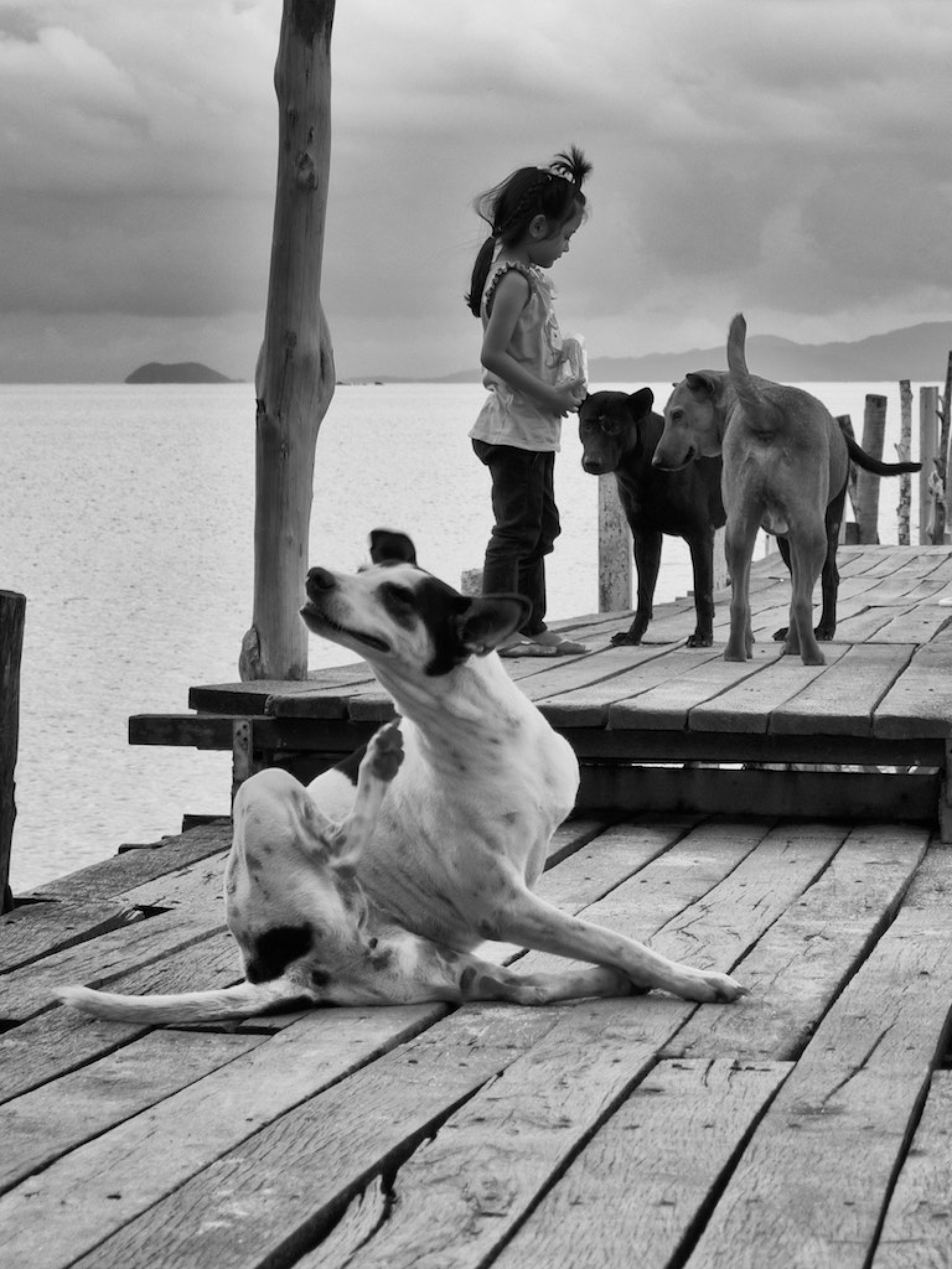 Three Dogs and a Girl by carlvanassche