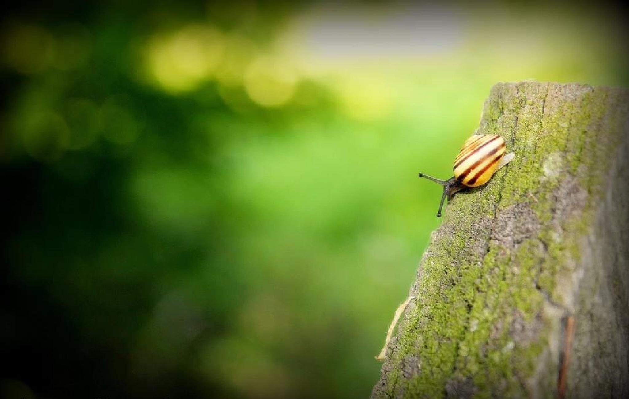 Snail by Agata