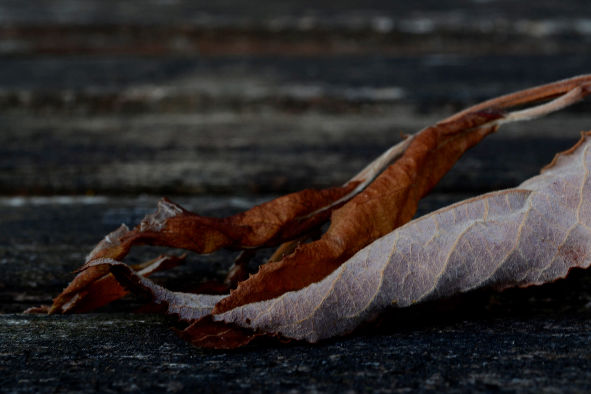 Dead leaves by Kevin Armsby