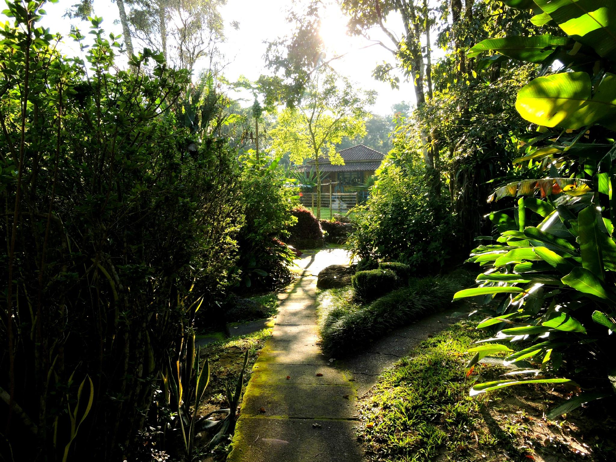 Garden by Rafael Gazoni