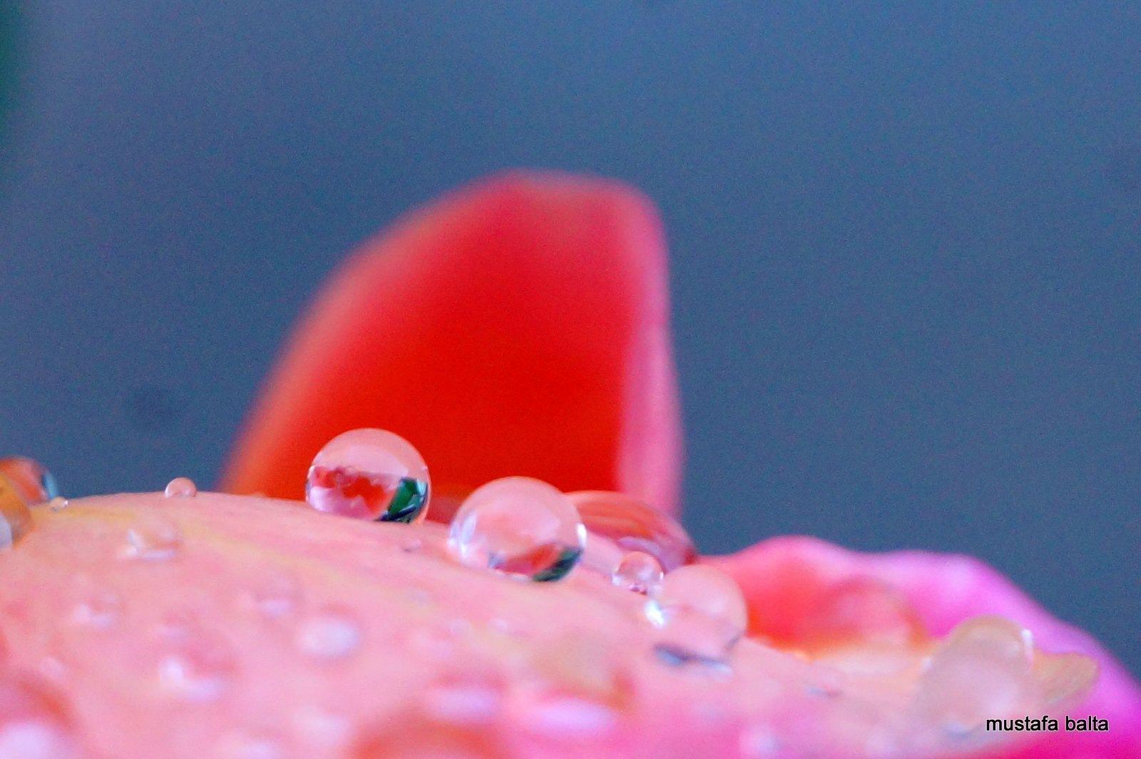 "Minicix Life "" Drops "" by Mustafa Balta"