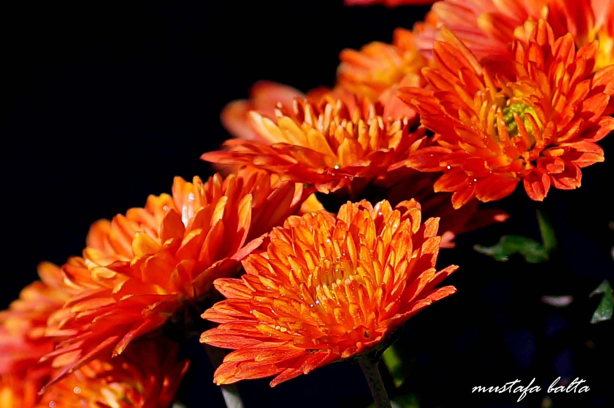 "Minicix Life "" orange ""  by Mustafa Balta"