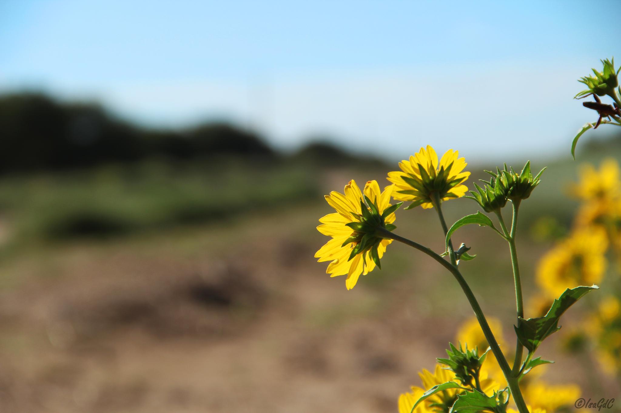 Perdida en el campo by IsaGdC