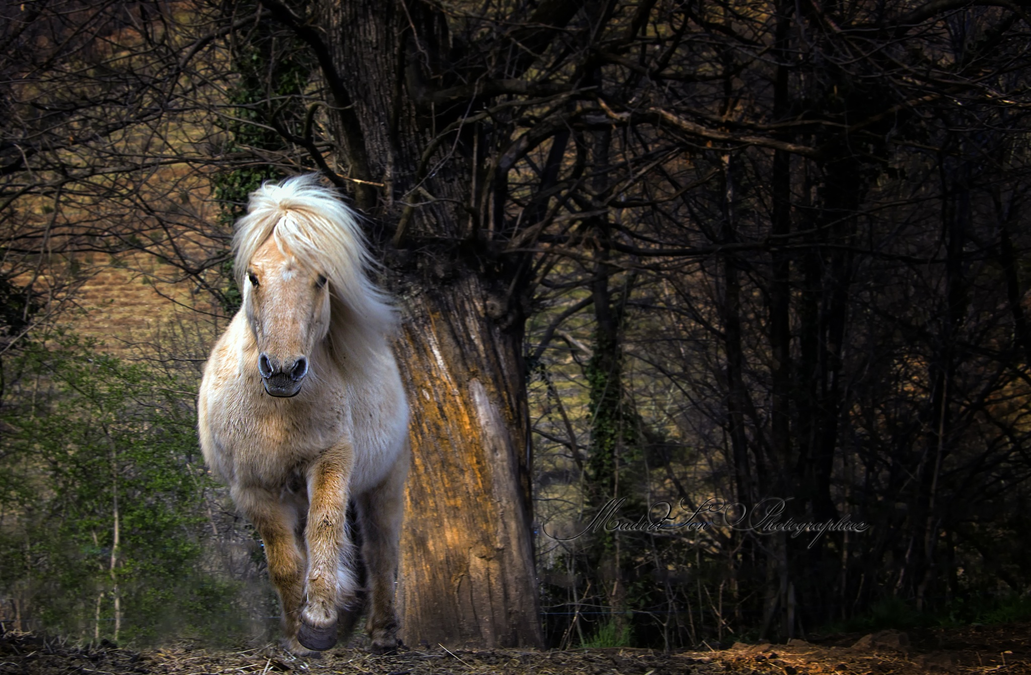 Galloping in the woods by OoEnJoYoO