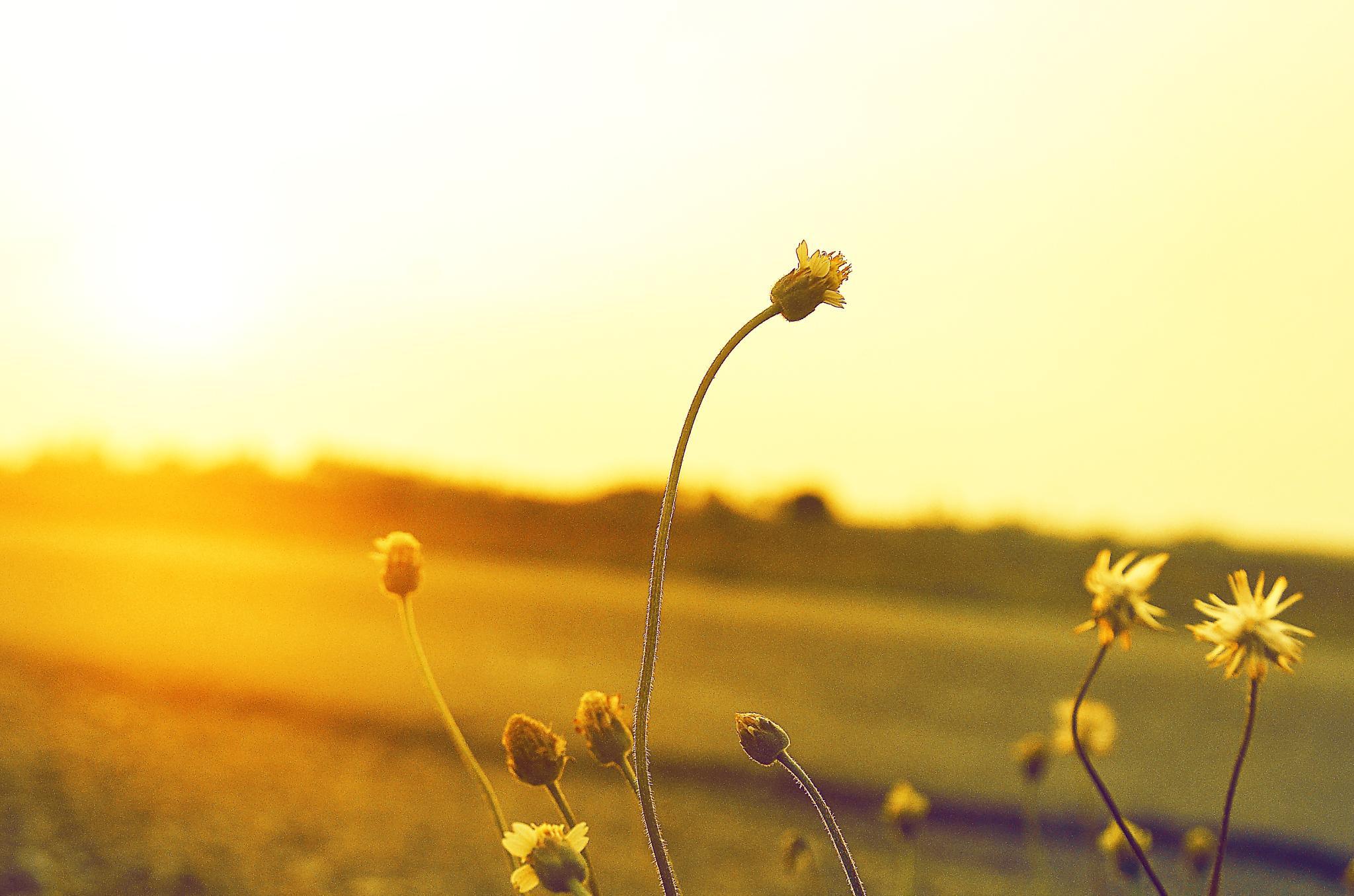 Sunset Moment by Wan Rexua