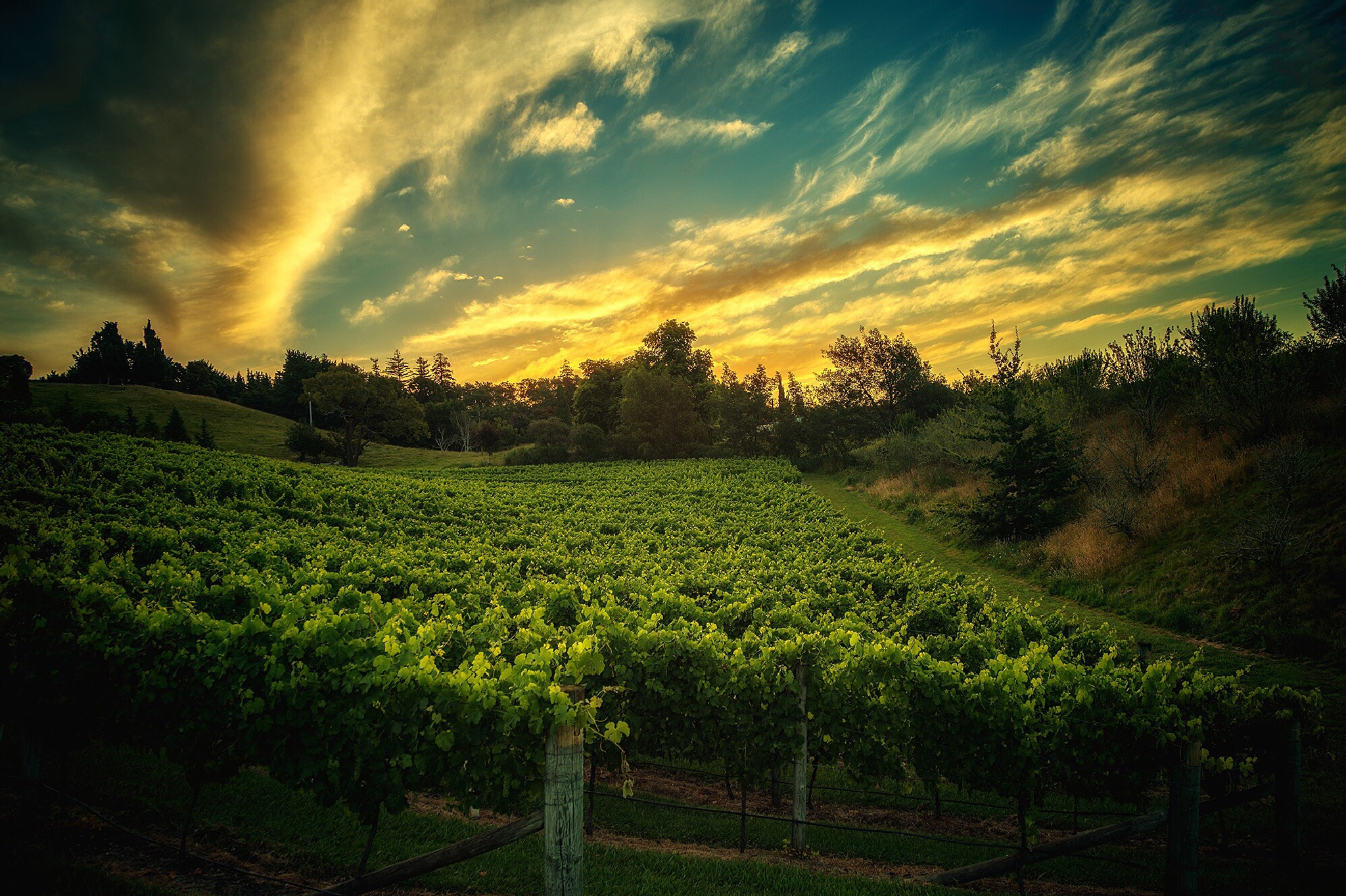 Sunset over the Vineyard by seosphotography