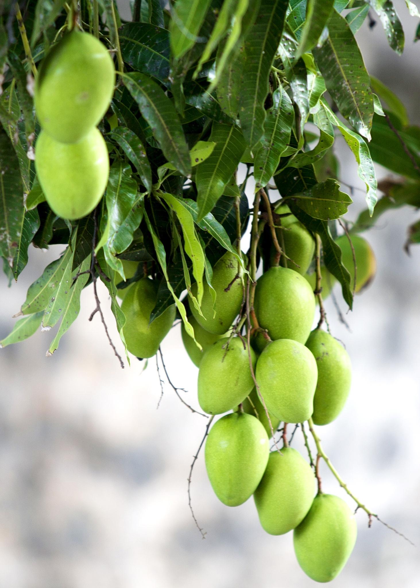 Fresh fruit by Taariq Tommy